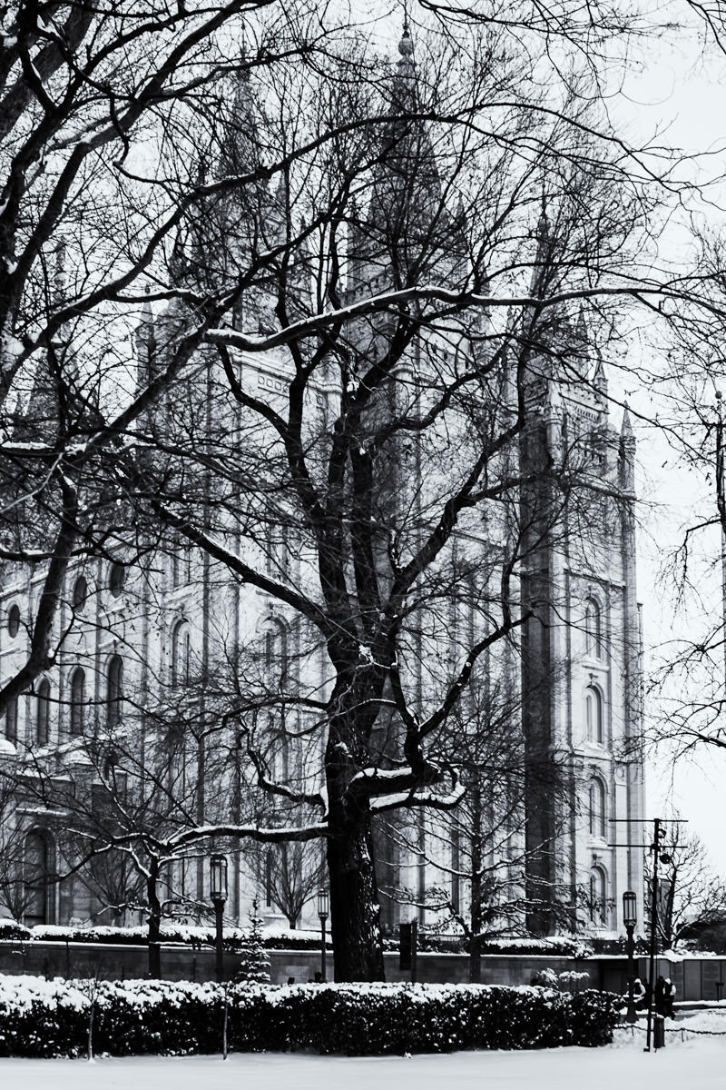 A tree obscures the Salt Lake Temple at Temple Square, Salt Lake City, Utah.