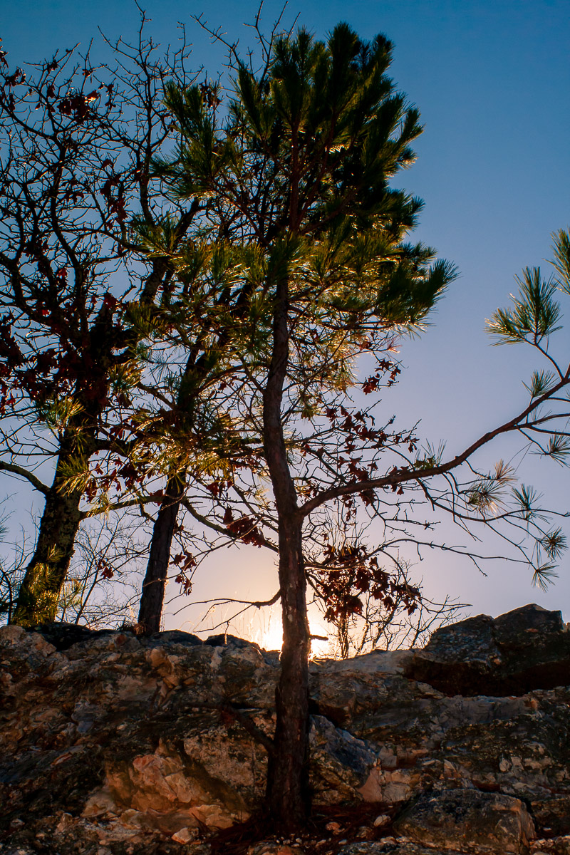 A tree is backlit by the morning sun in Hot Springs, Arkansas.