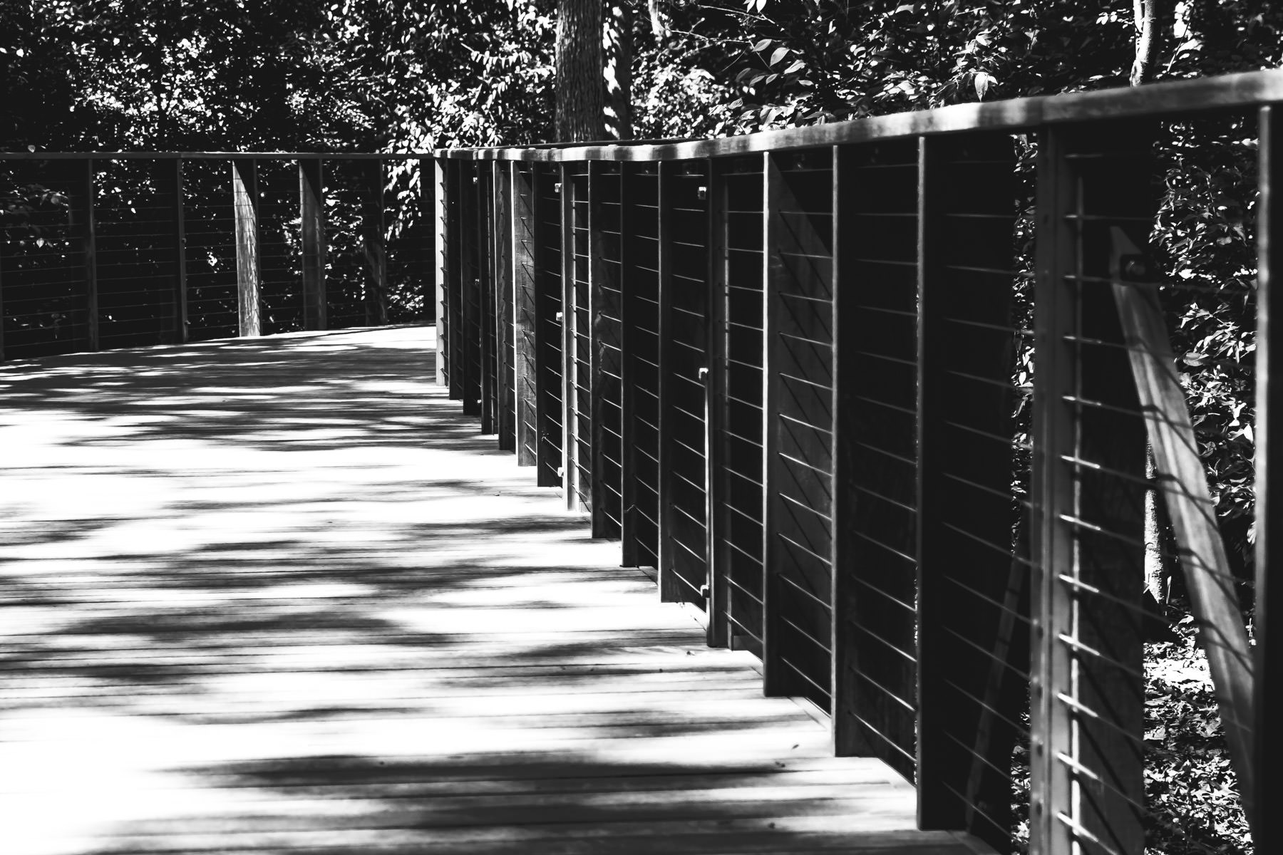 A pedestrian bridge winds through the trees at the Fort Worth Botanic Garden.