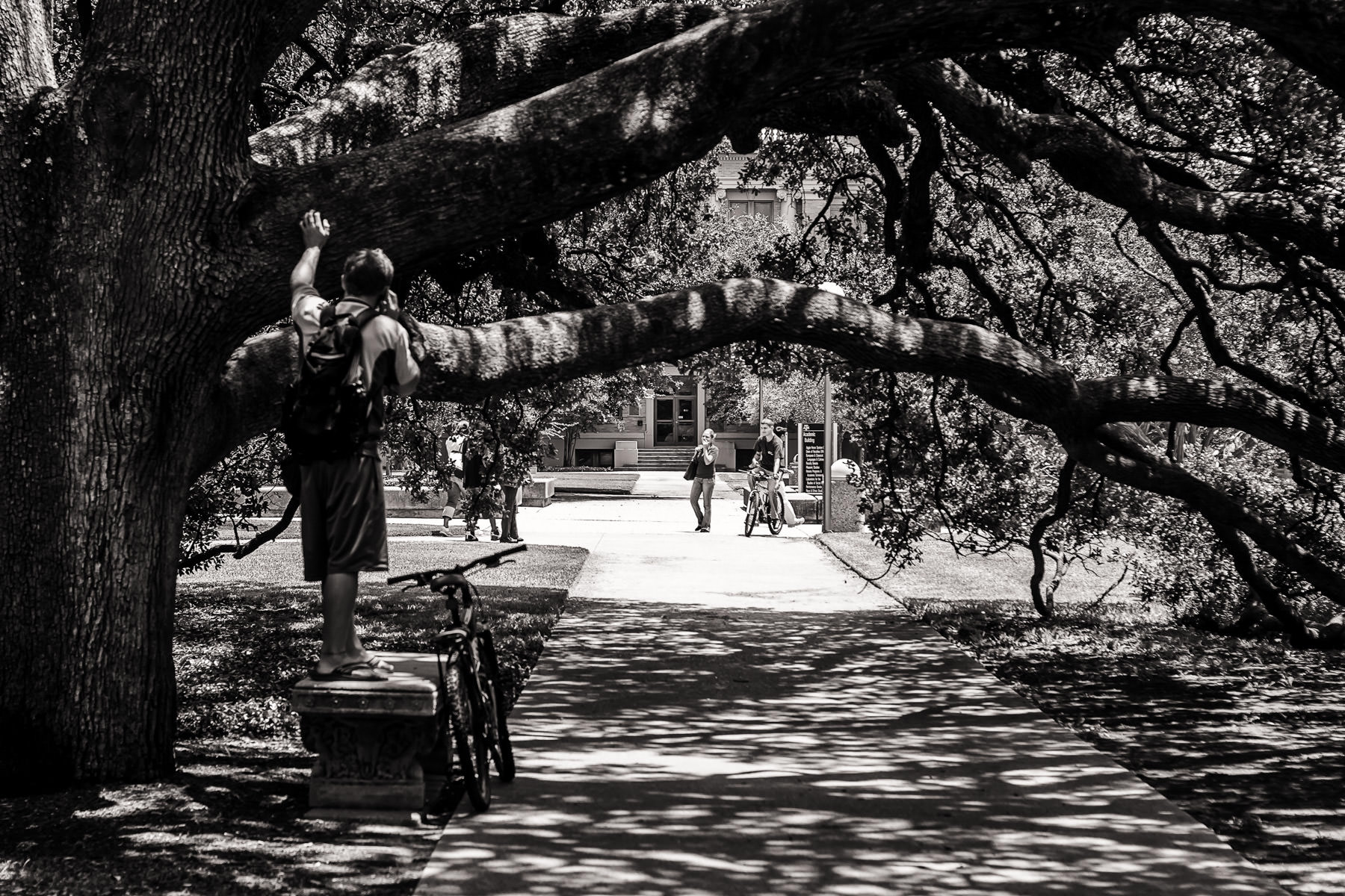 A student makes a phone call while standing on a bench under Texas A&M University's Century Oak, College Station, Texas.