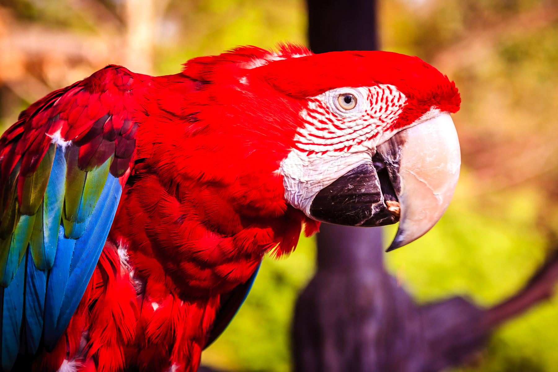 A red macaw at Tyler, Texas' Caldwell Zoo.