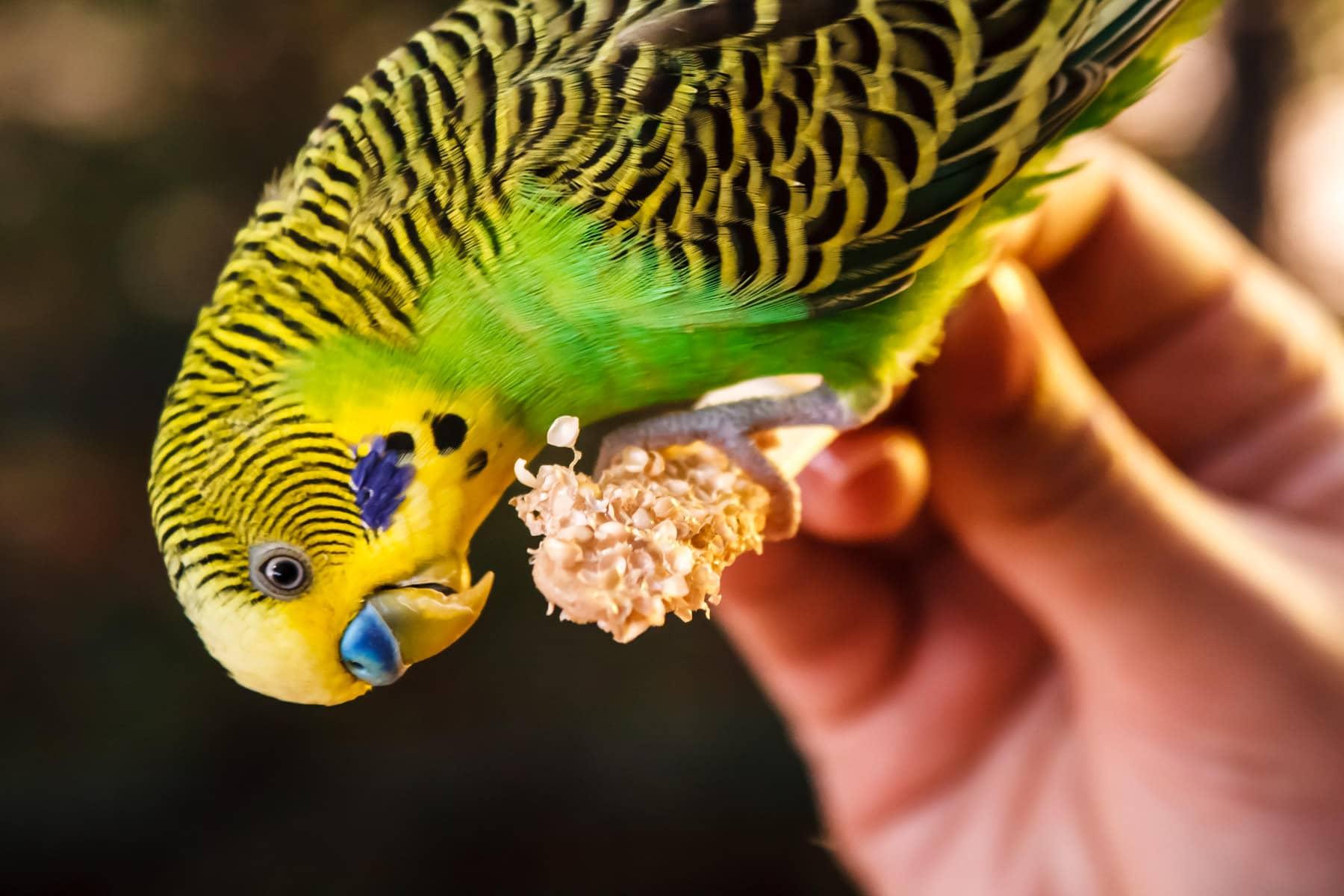 A bird snacks on seed at Tyler, Texas' Caldwell Zoo.