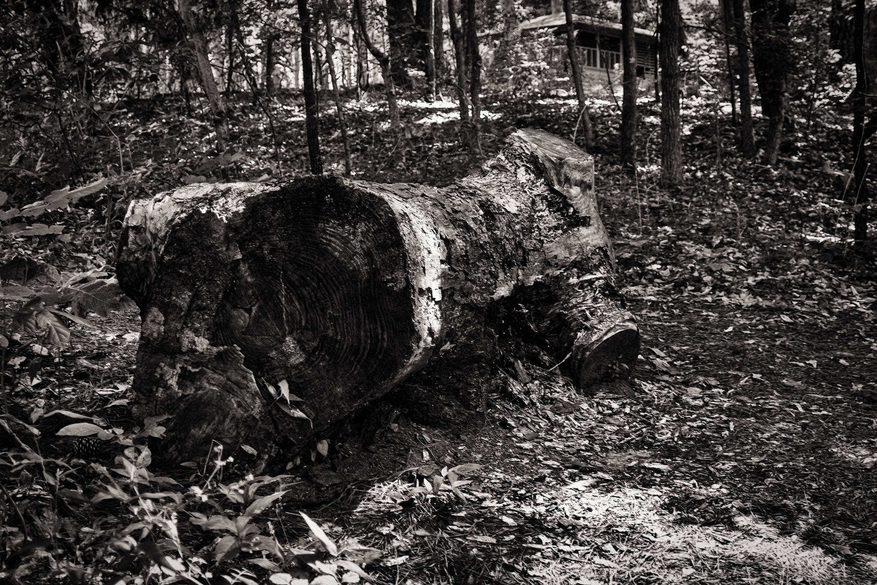 A log lies on the ground at Tyler State Park, Texas.