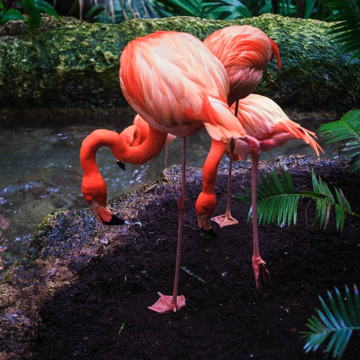 Flamingos at the Dallas World Aquarium.