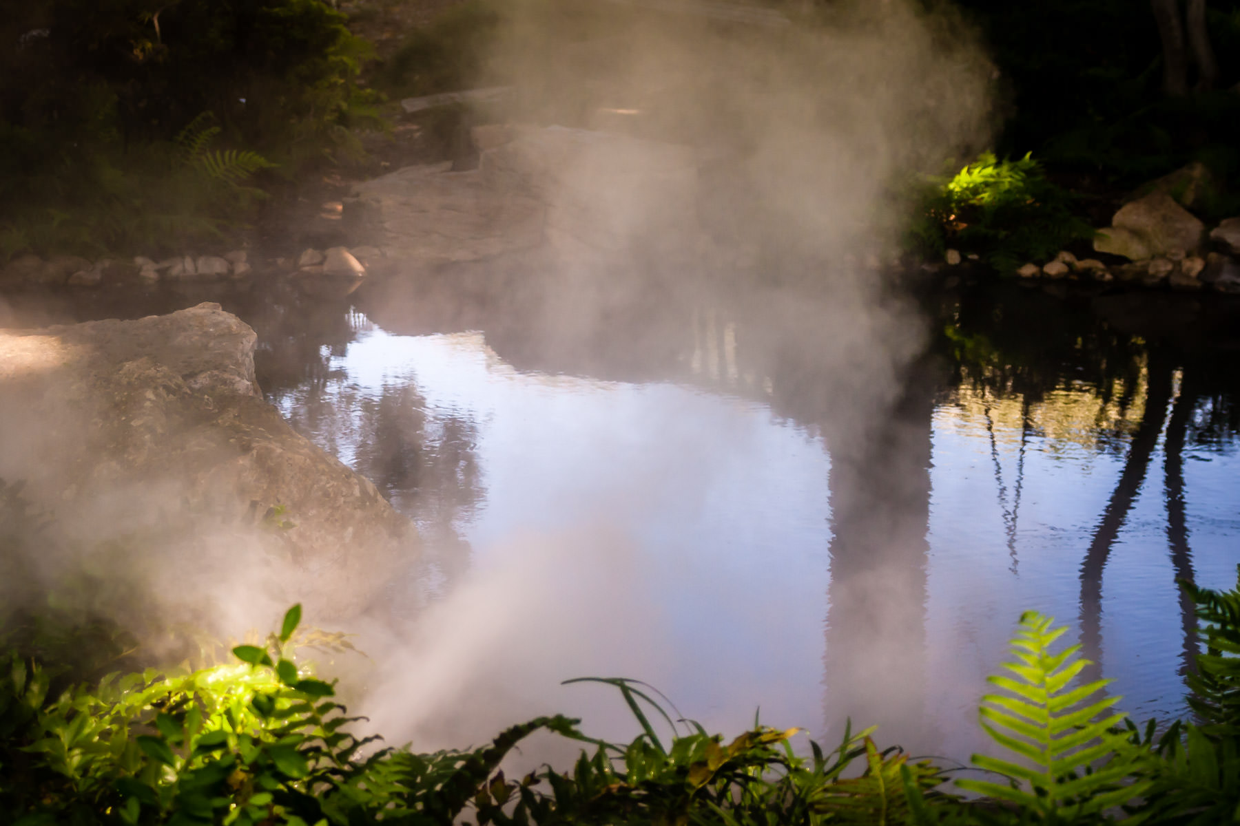 Mist forms over a pond at the Dallas Arboretum.