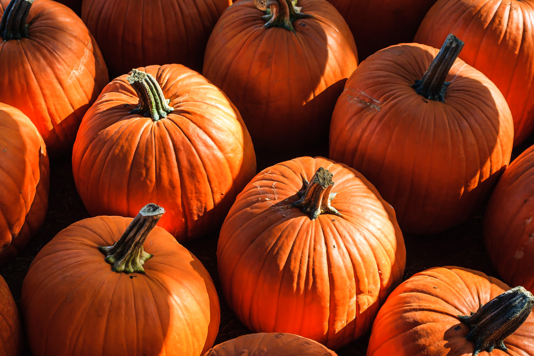 Pumpkins at Moore Farms, Bullard, Texas.