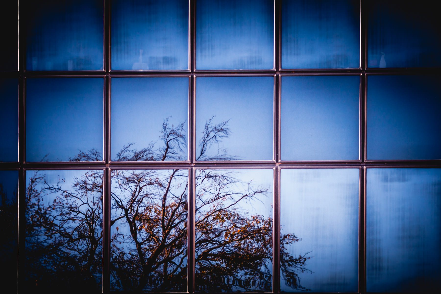 A tree is reflected in the windows of an adjacent building in Downtown Tyler, Texas.