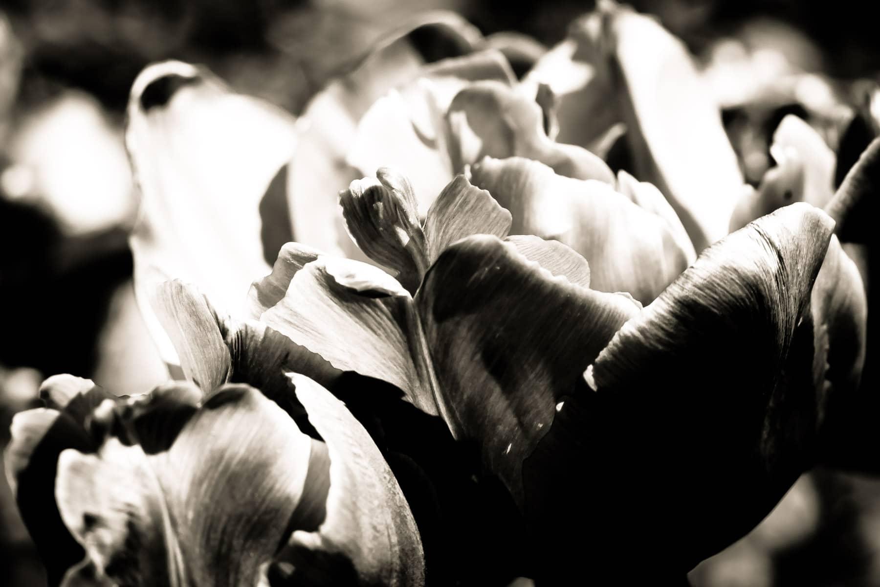 Delicate flower petals at the Dallas Arboretum.