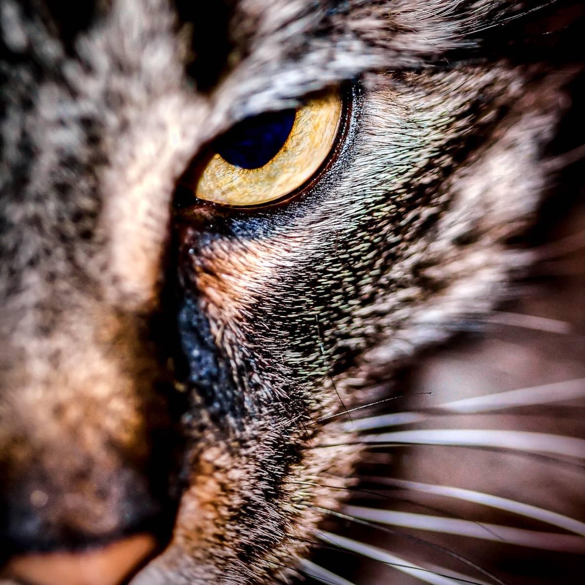 Our cat Miis' left eye.