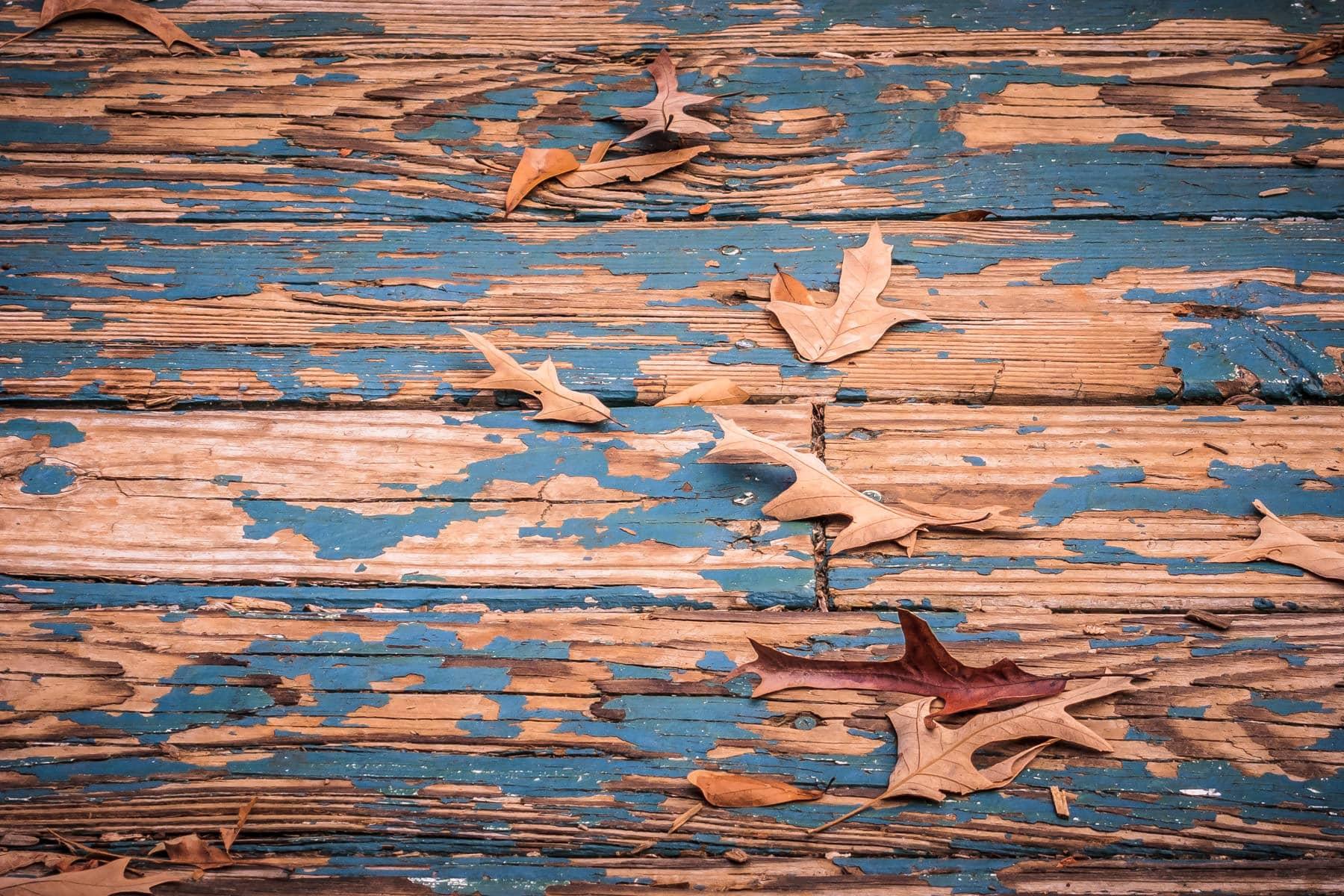 Leaves at Pollard Park, Tyler, Texas.