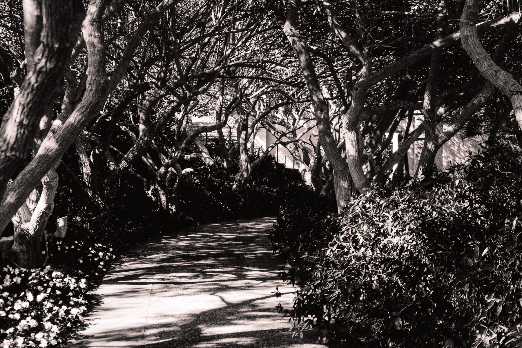 A sidewalk under tree branches at the Dallas Arboretum.
