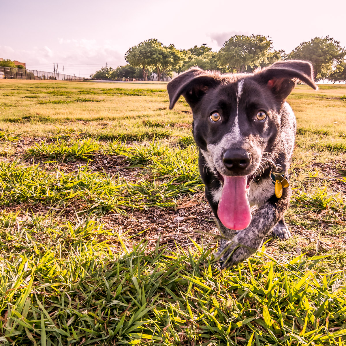 Our dog, Winston, at Addison Circle Park, Addison, Texas.
