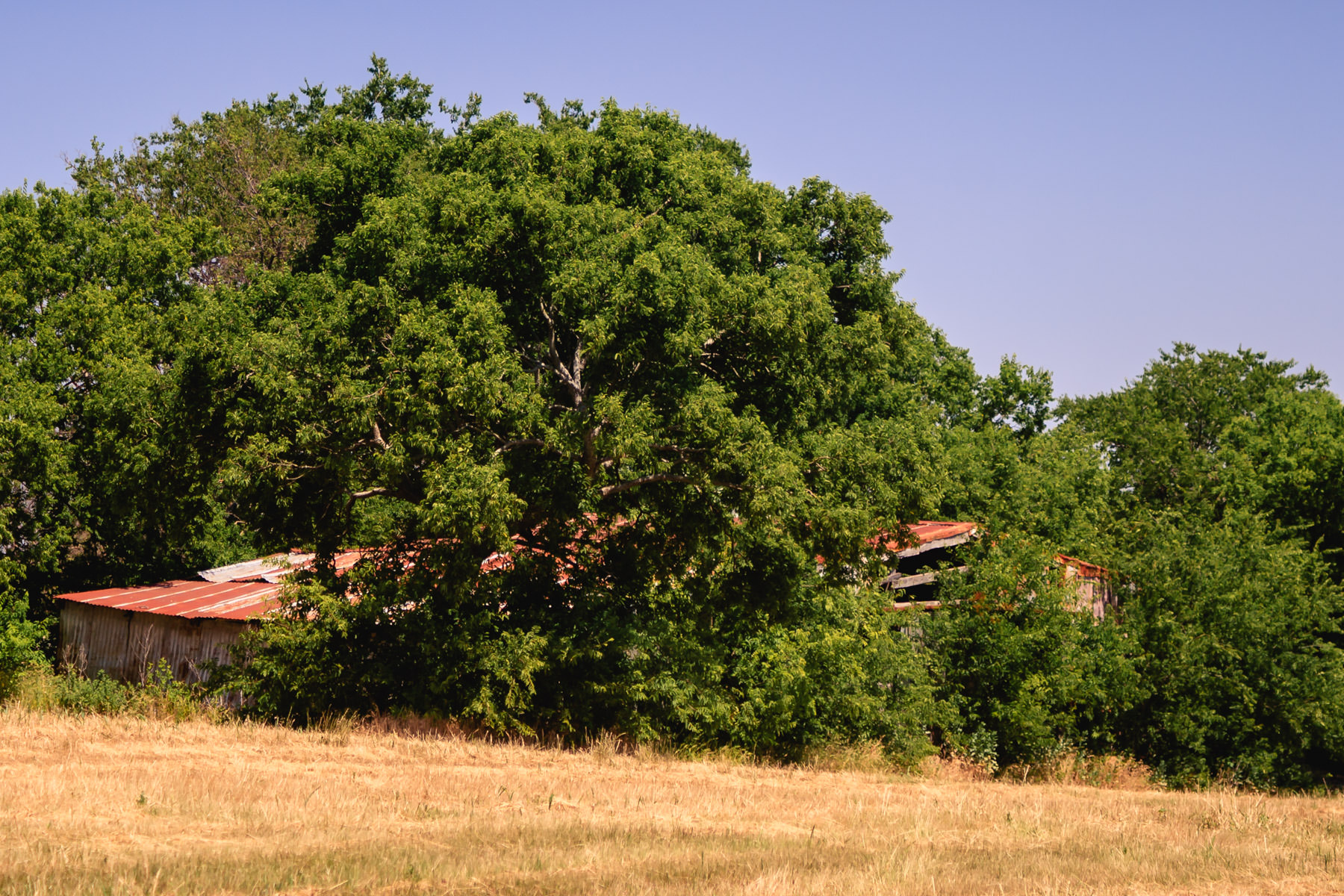Somewhere north of Dallas, a barn is inexorably consumed by time and trees.
