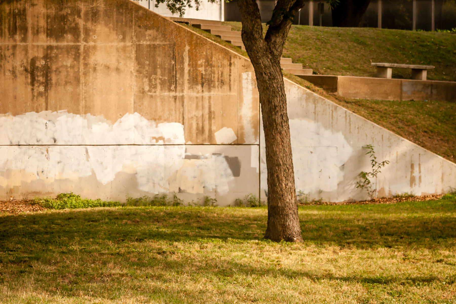 The morning sun lights a tree growing near a retaining wall along Dallas' Turtle Creek.