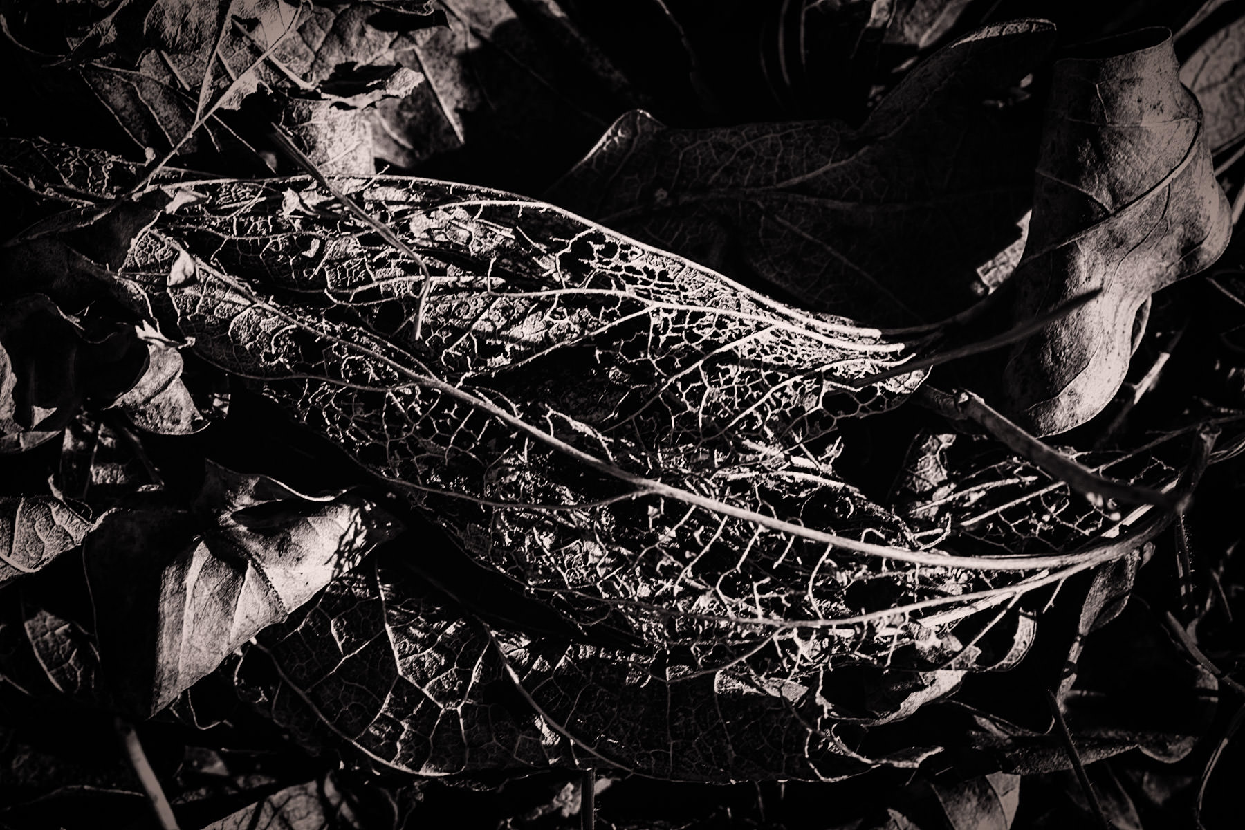 Detail of a decaying leaf.