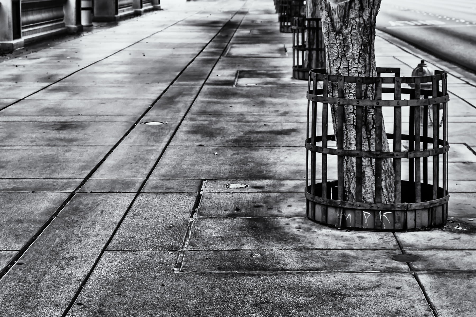 Trees grow along the Las Vegas Boulevard sidewalk in front of the Bellagio.