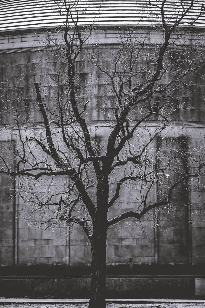 Detail of a dead tree silhouetted against the planetarium in Fair Park, Dallas, Texas.