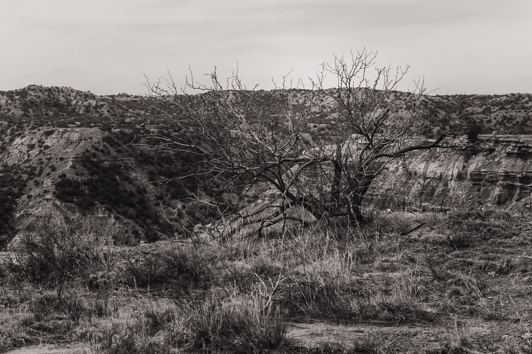A lonely tree at Palo Duro Canyon, Texas.