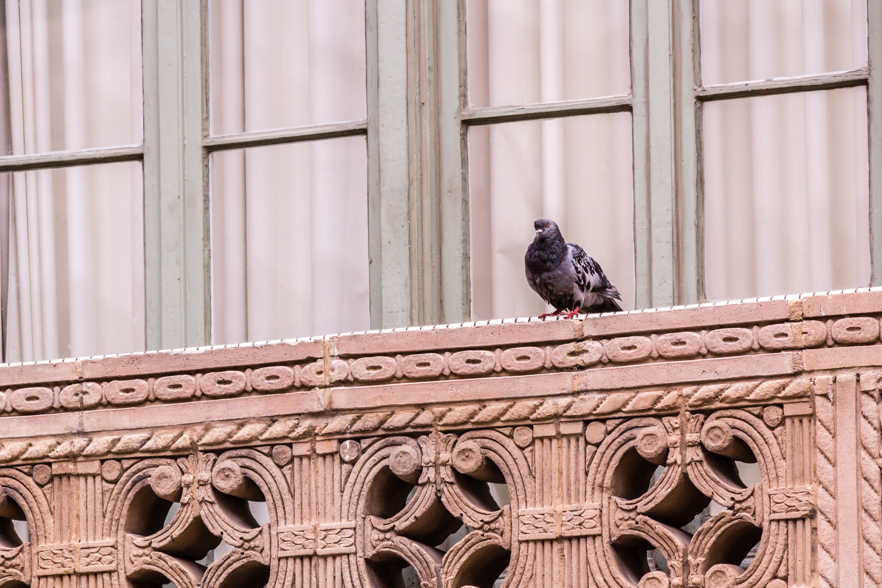 A pigeon surveys the goings-on below on the streets of Downtown Fort Worth, Texas.