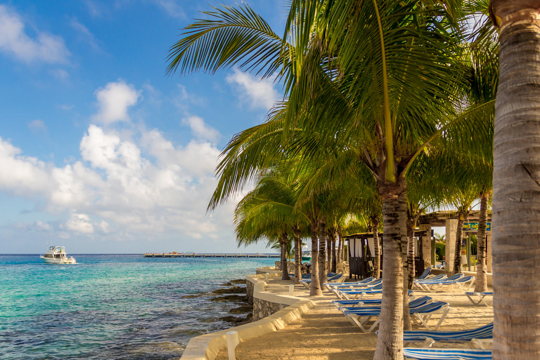 Palm trees in Cozumel, Mexico.