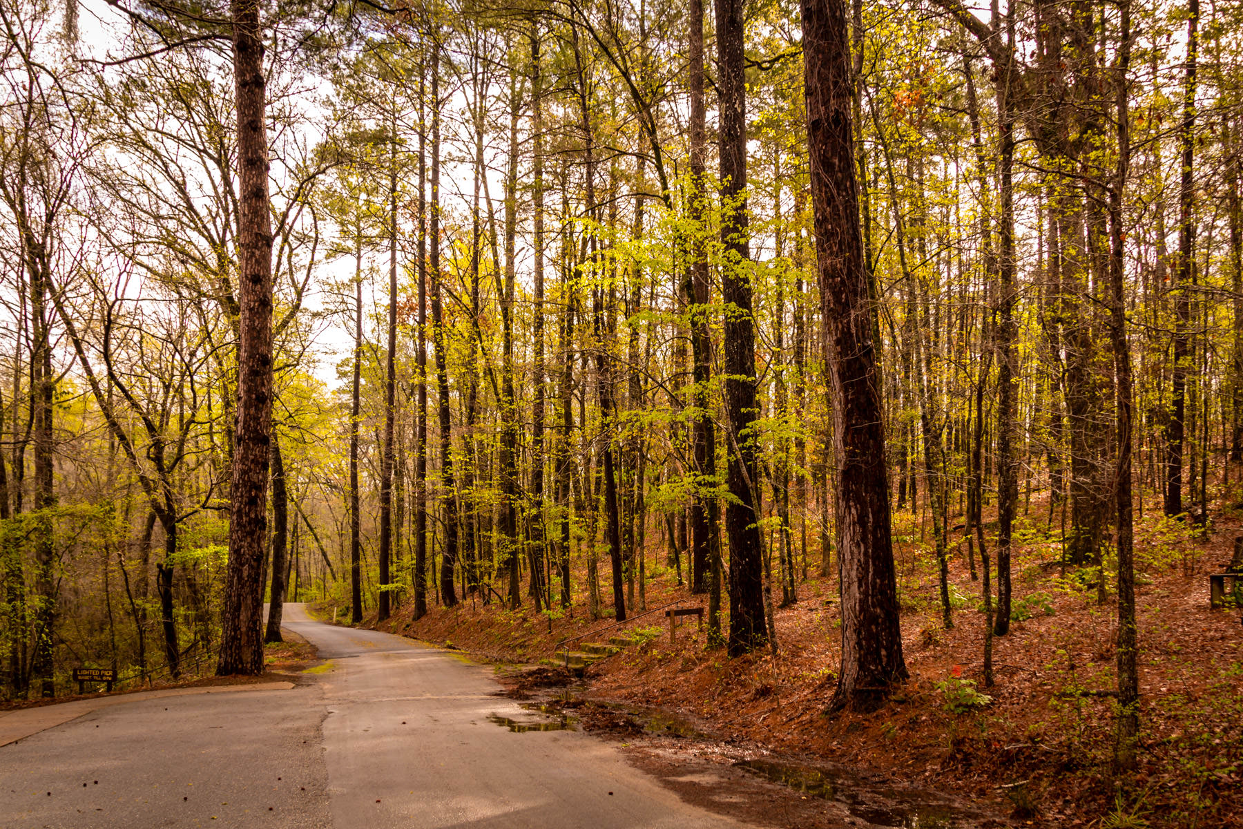 A road among the trees at Caddo Lake State Park, Texas.