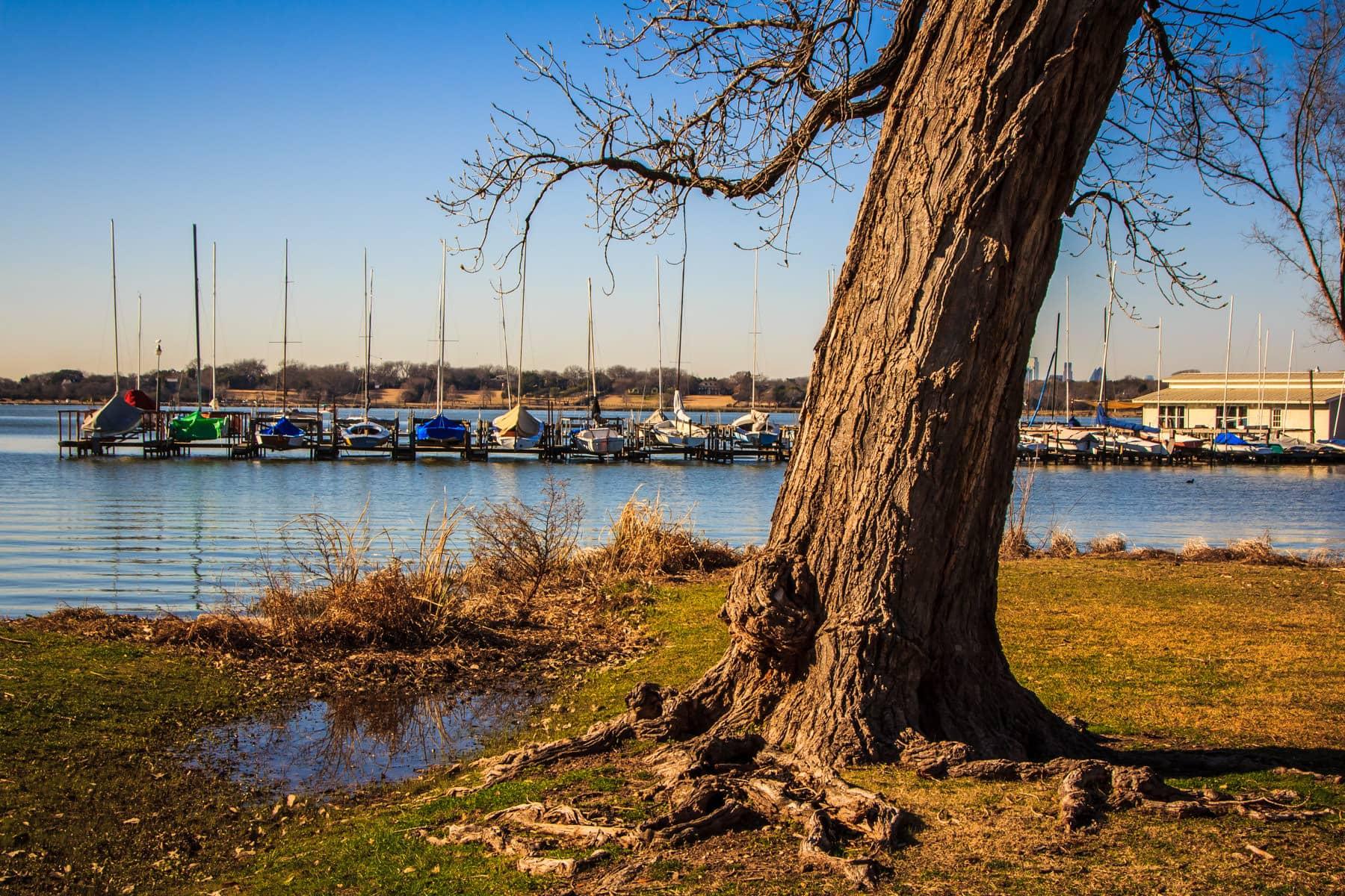 A tree grows ashore of a marina at White Rock Lake, Dallas.