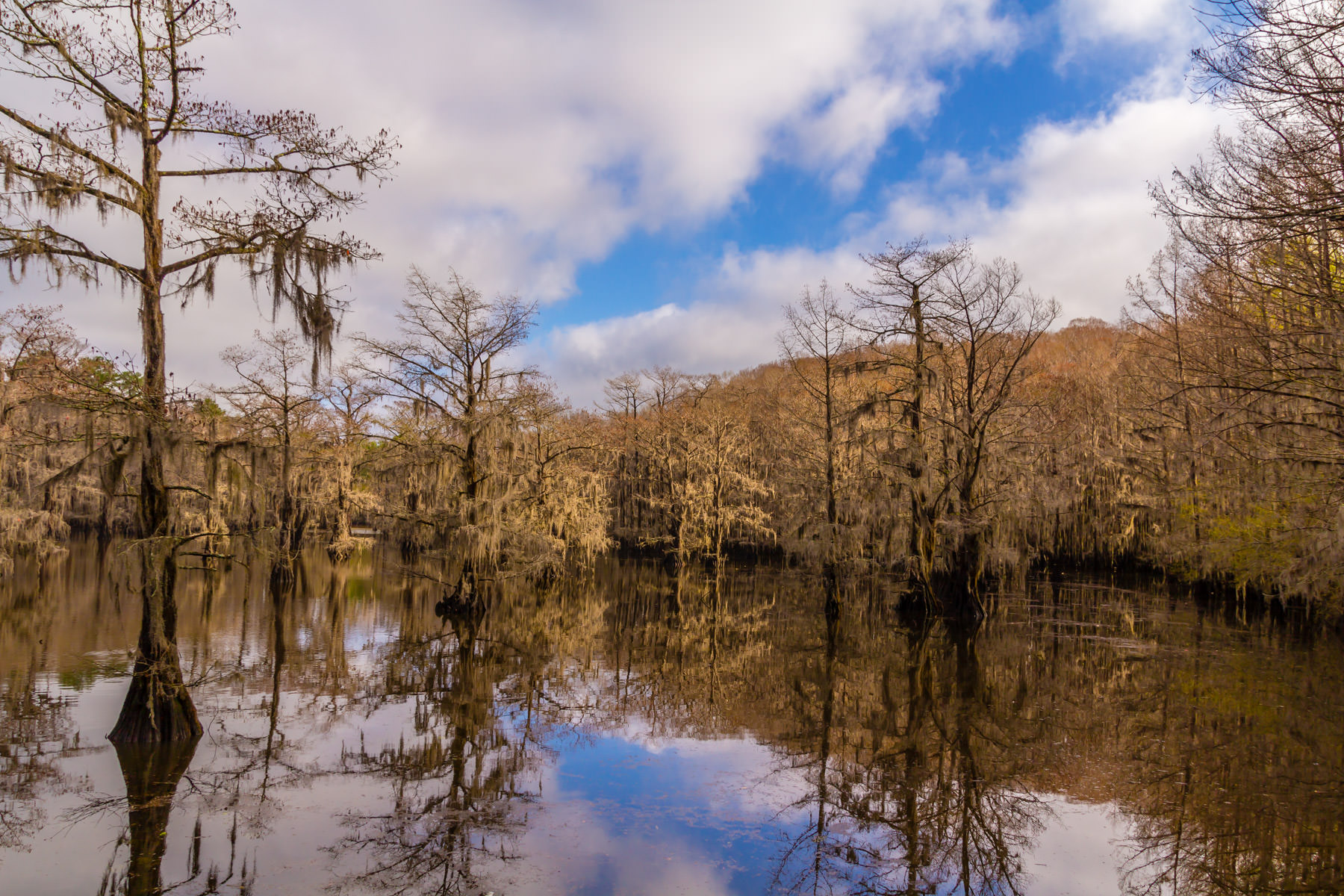 Spanish Moss drapes from cypress trees at Caddo Lake State Park, Texas.