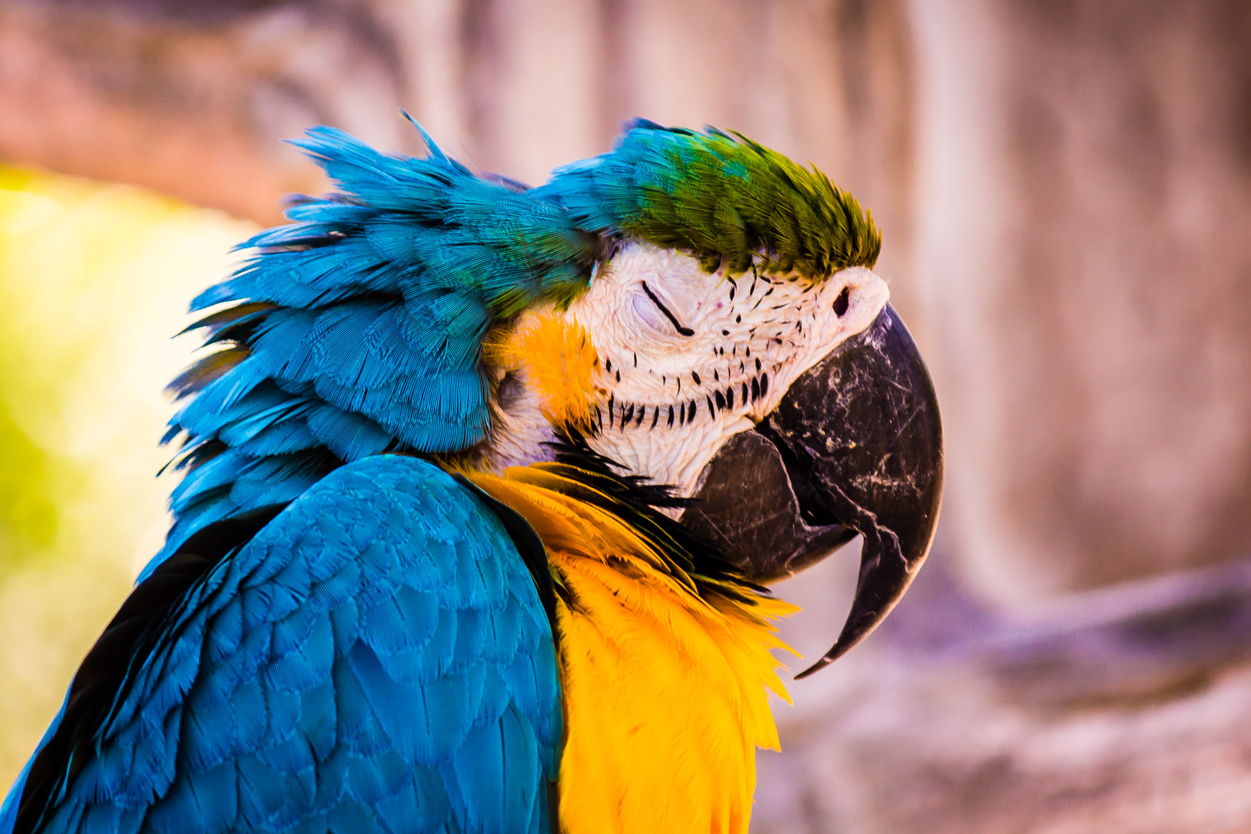 A macaw spotted at Caldwell Zoo, Tyler, Texas.