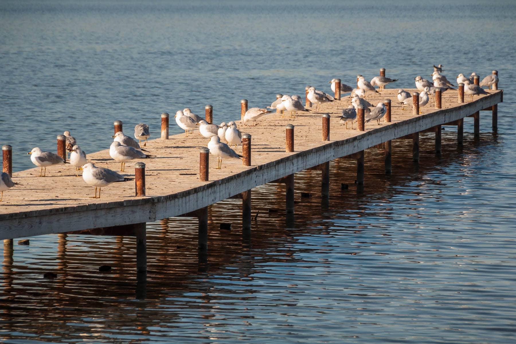 Birds congregate on a pier at White Rock Lake, Dallas.