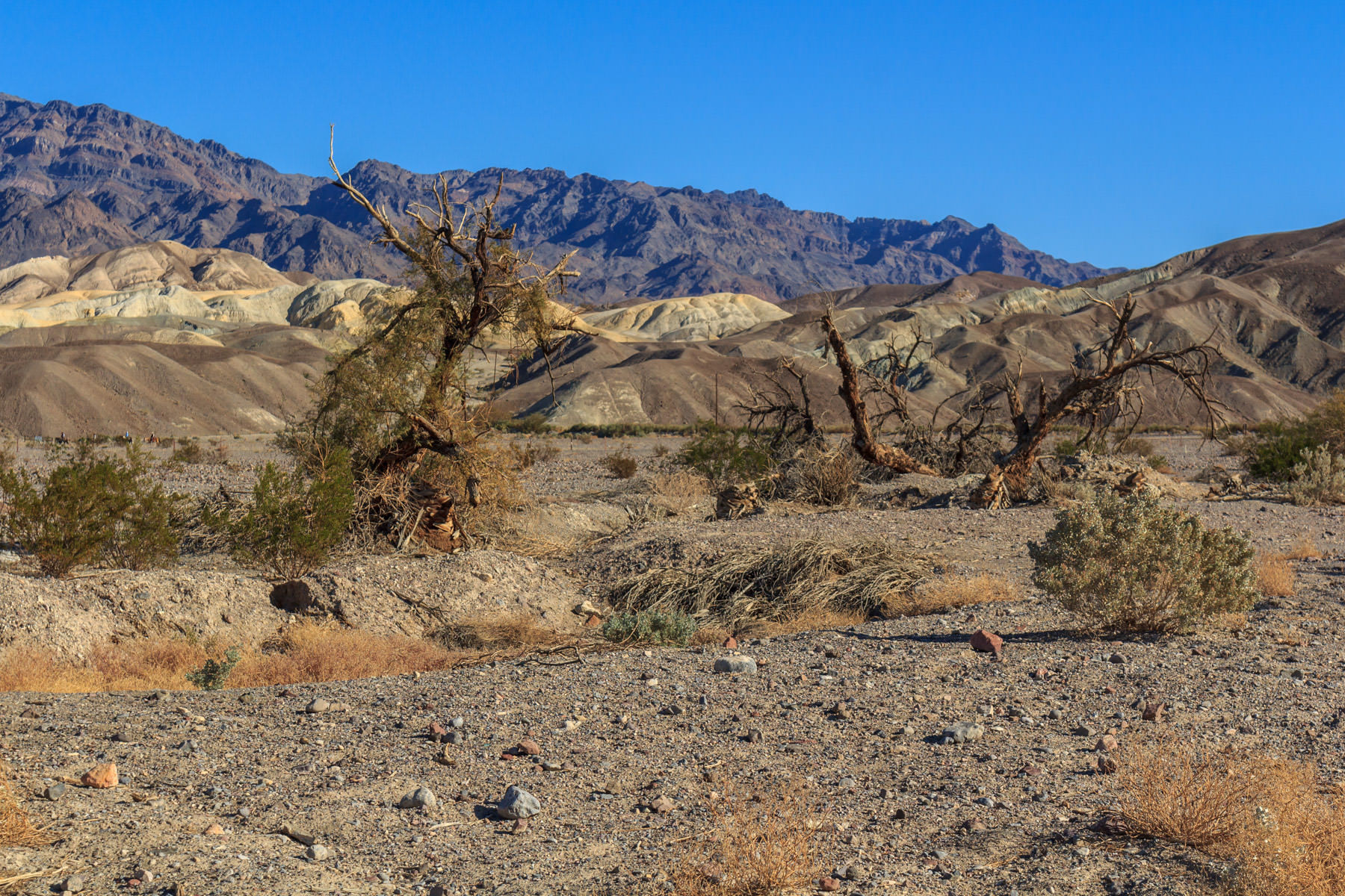 Weathered brush bakes under the desert sun at Death Valley, California.