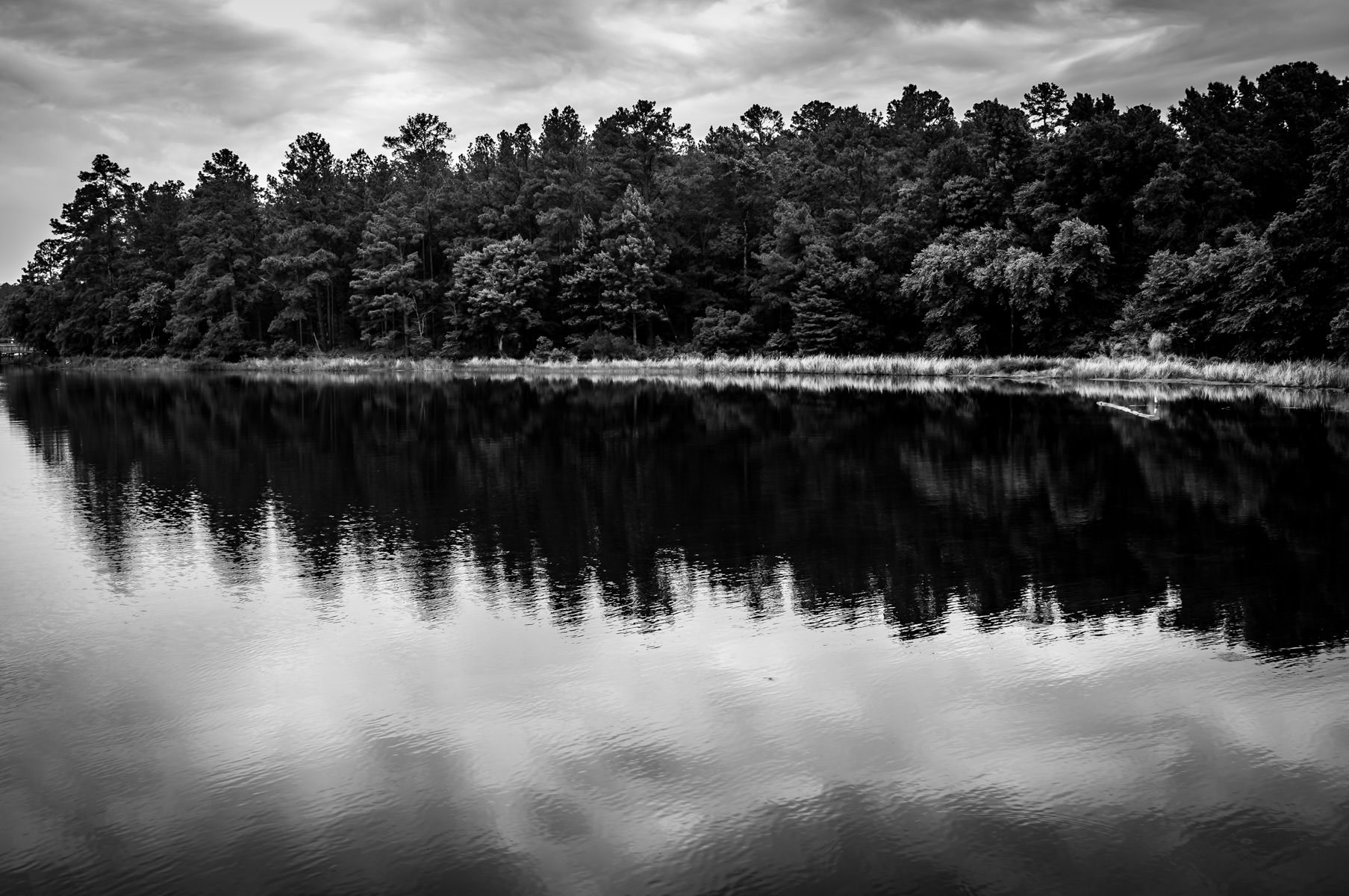 Trees line the shore of the lake at Tyler State Park, Tyler, Texas.