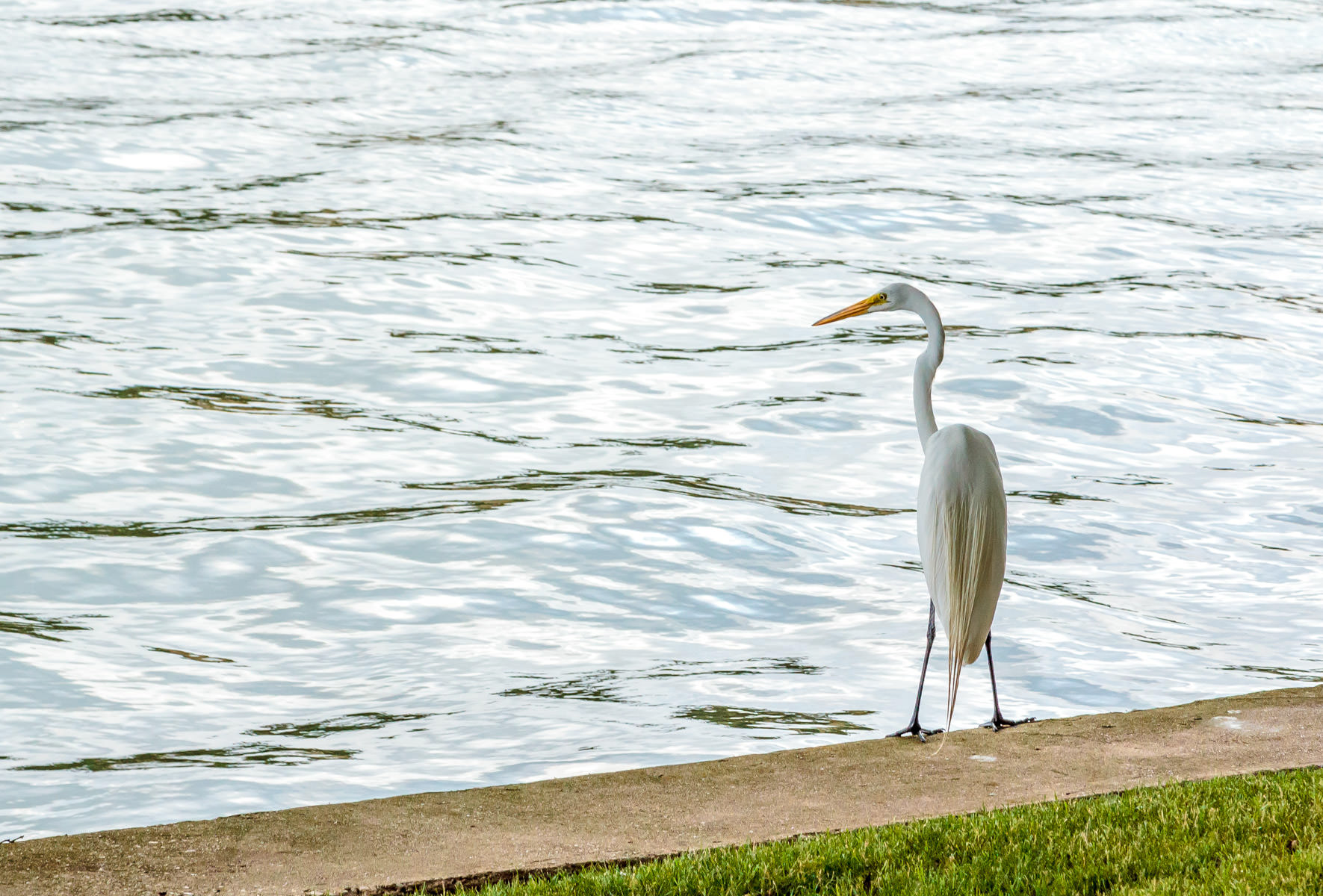 A crane spotted along the Mandalay Canal, Las Colinas, Irving, Texas.