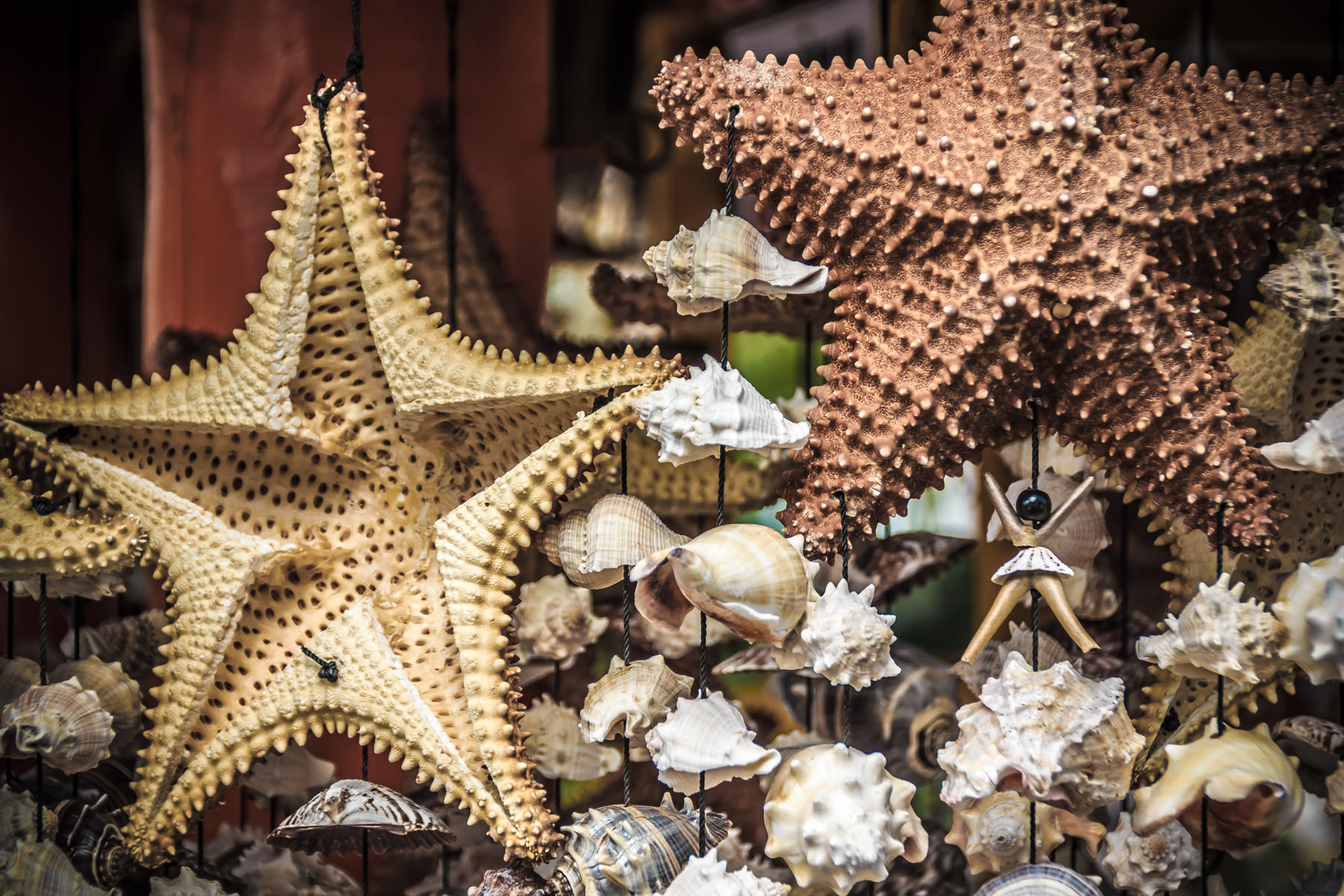 Wind chimes made of dried starfish and seashells, spotted for sale in Cozumel, Mexico.