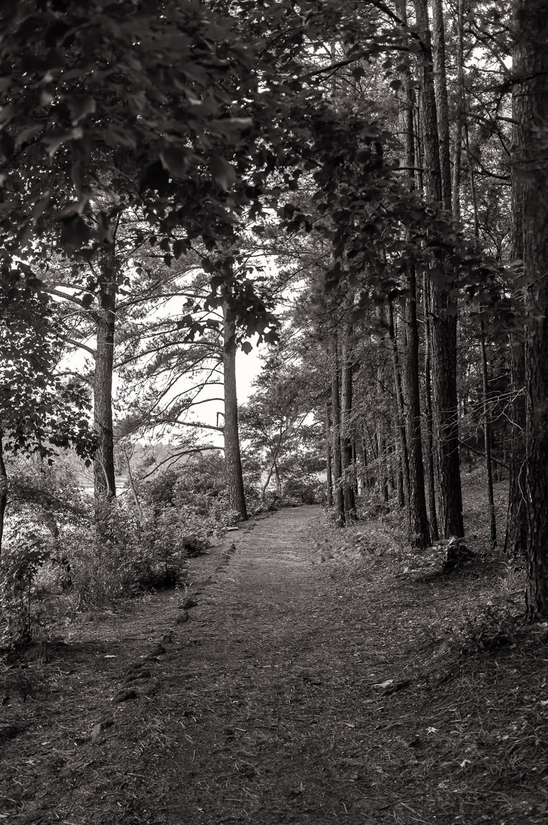 A tree-lined hiking path along the shore of the lake at Tyler State Park, Texas.