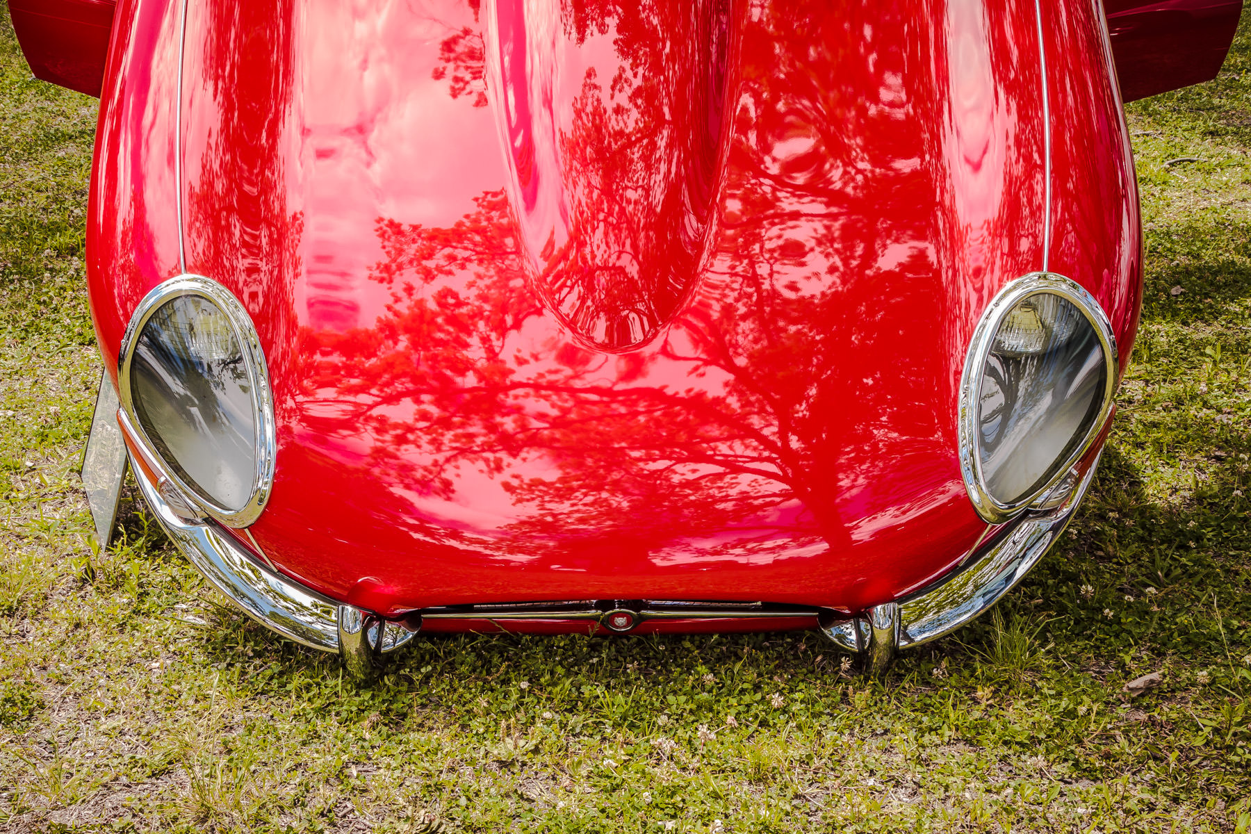 A Jaguar E-Type's hood (or bonnet) at Dallas' All British and European Car Day.