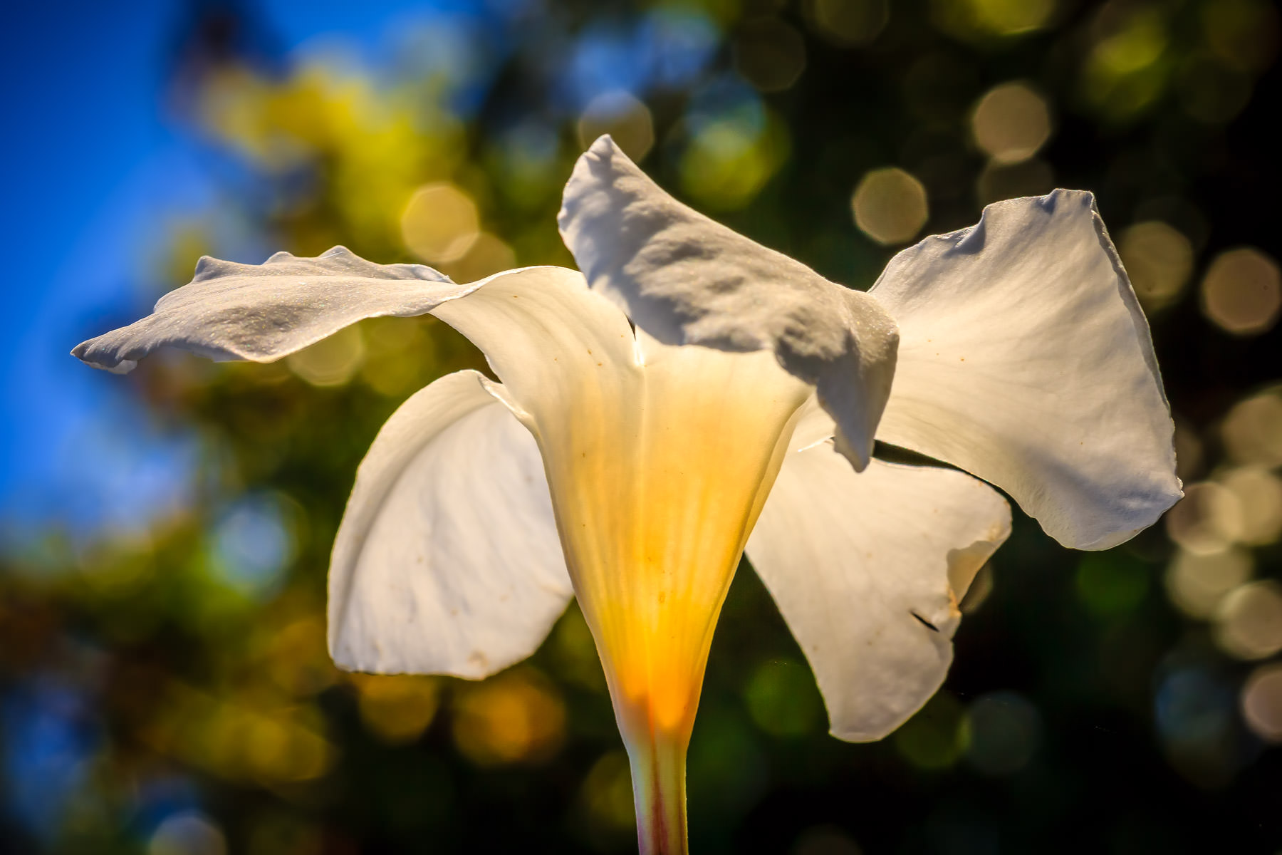 The morning sun illuminates a flower at the Fort Worth Botanic Garden.