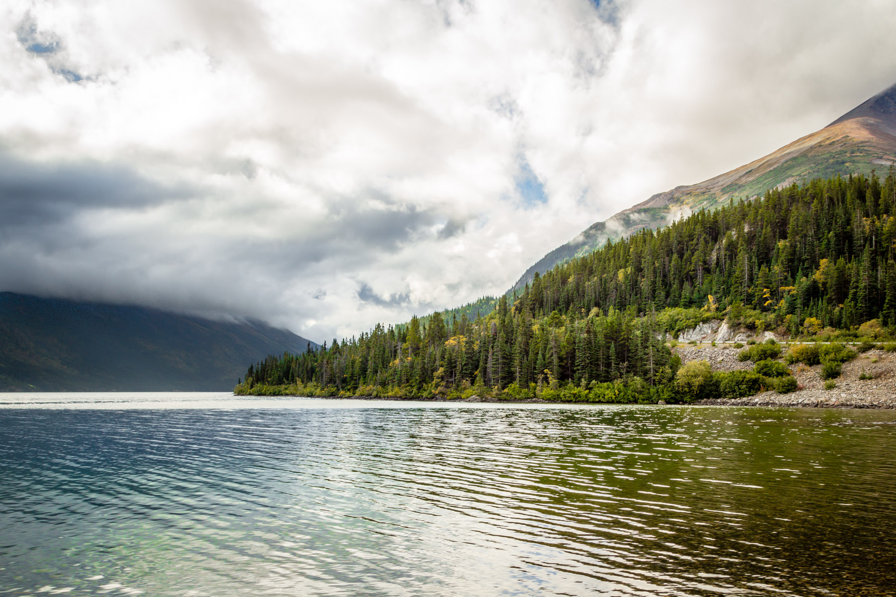 The tree-line shore of British Columbia, Canada's Tutshi Lake.