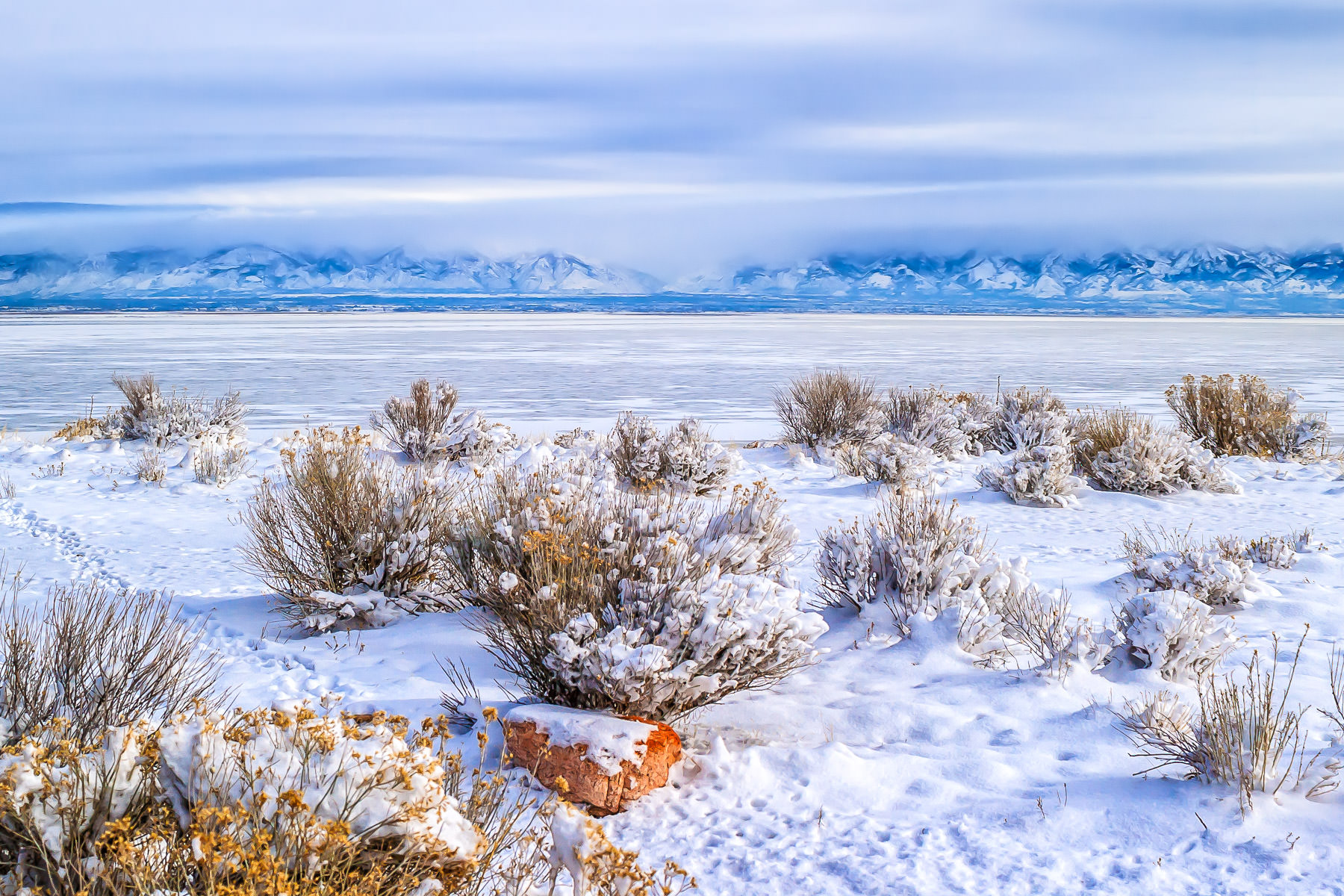 Frozen brush on the shore of the Great Salt Lake at Antelope Island State Park, Utah.