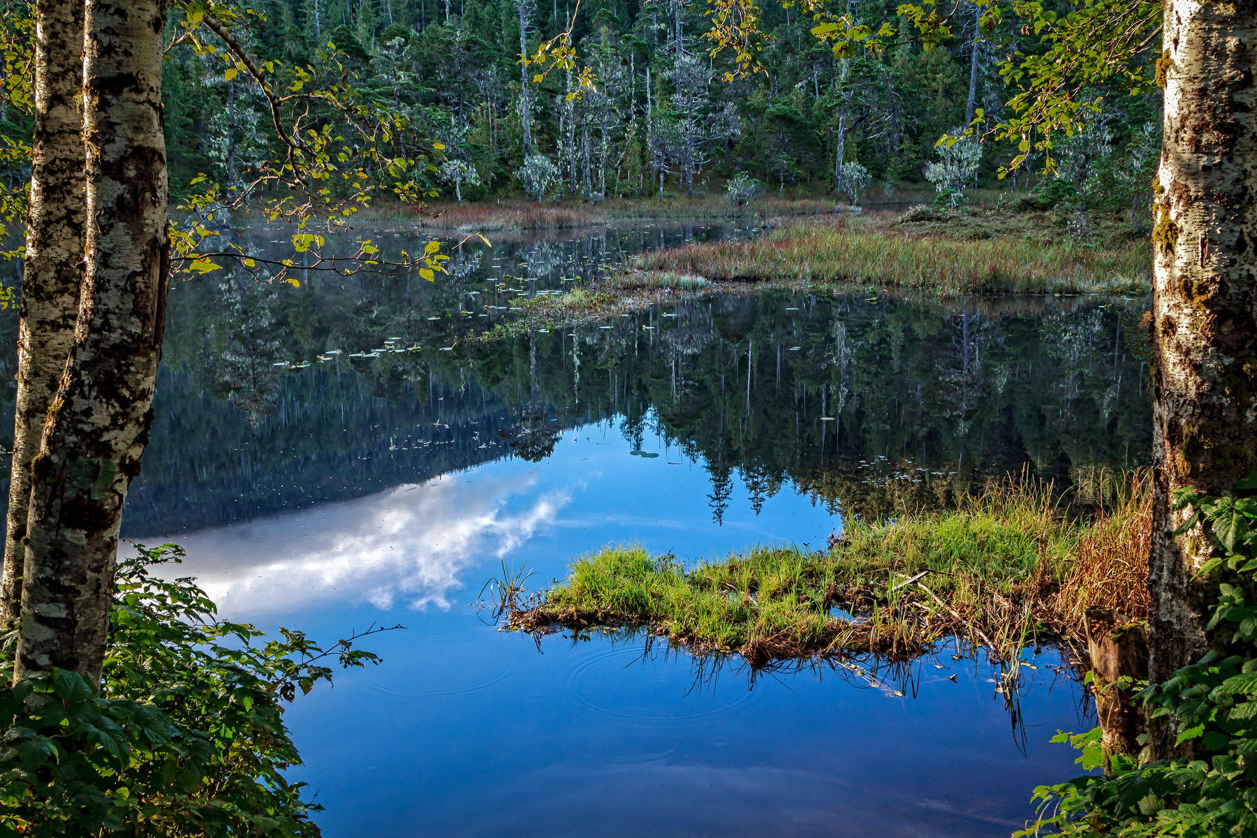 A small pond in the Tongass National Forest just outside of Ketchikan, Alaska.