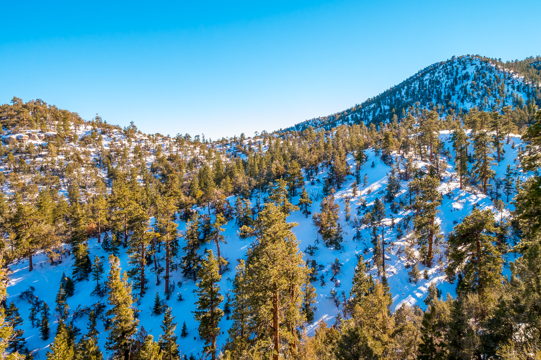 Snow and trees cover the foothills of Nevada's Mount Charleston.
