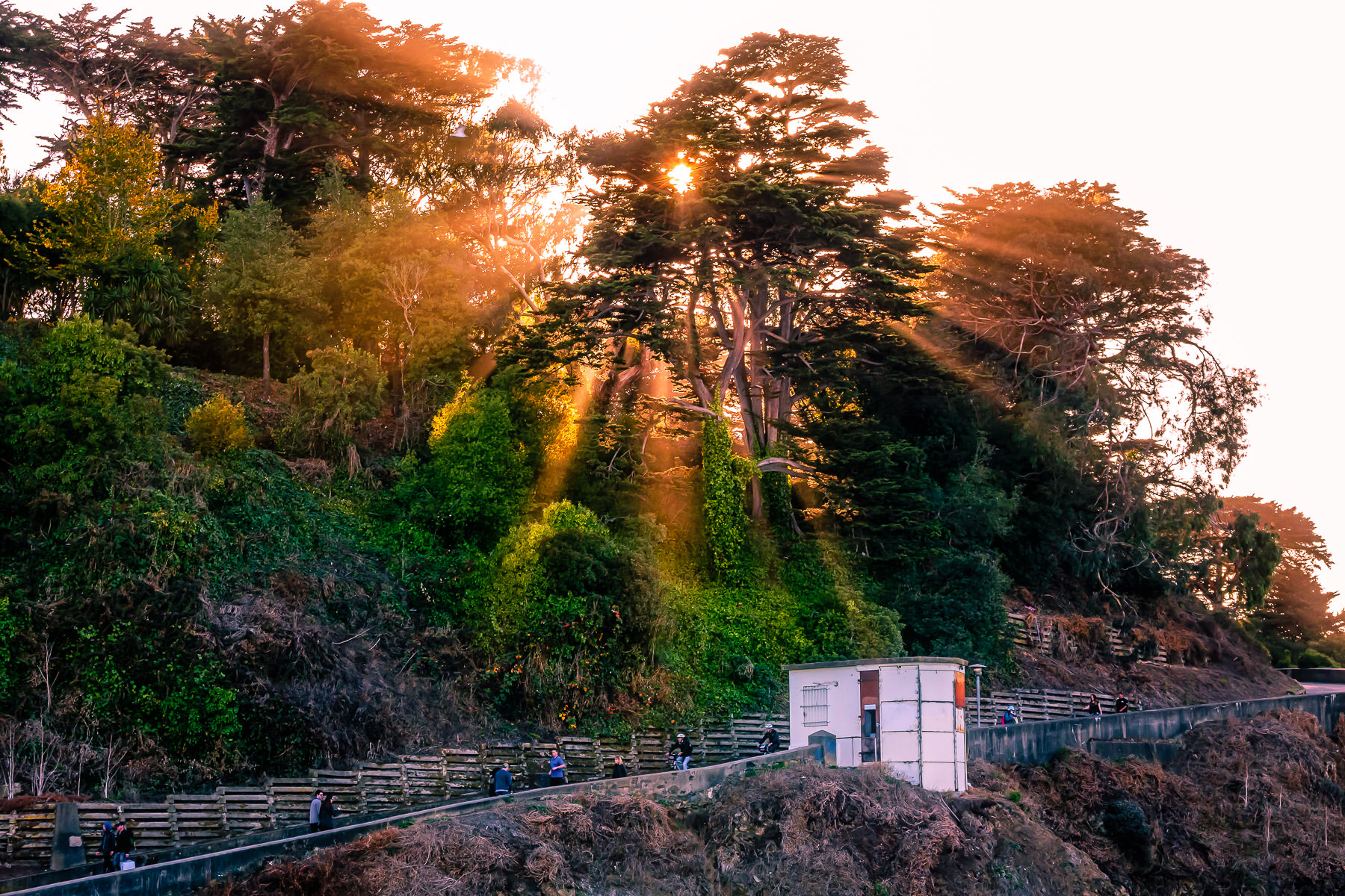 The late afternoon sun pours through trees along a path leading from San Francisco's Aquatic Park to the historic Fort Mason.