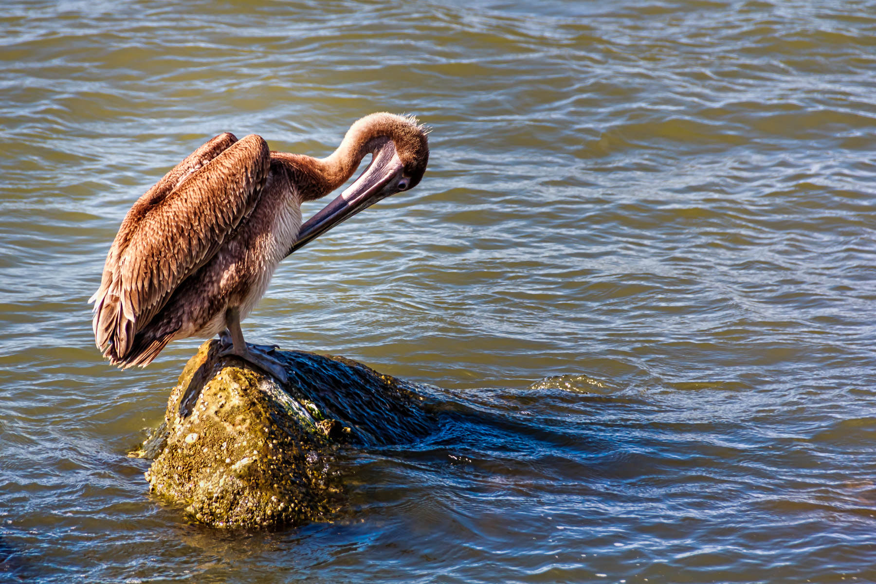 A pelican cleans his feathers along the waterfront at the Port of Galveston, Texas.