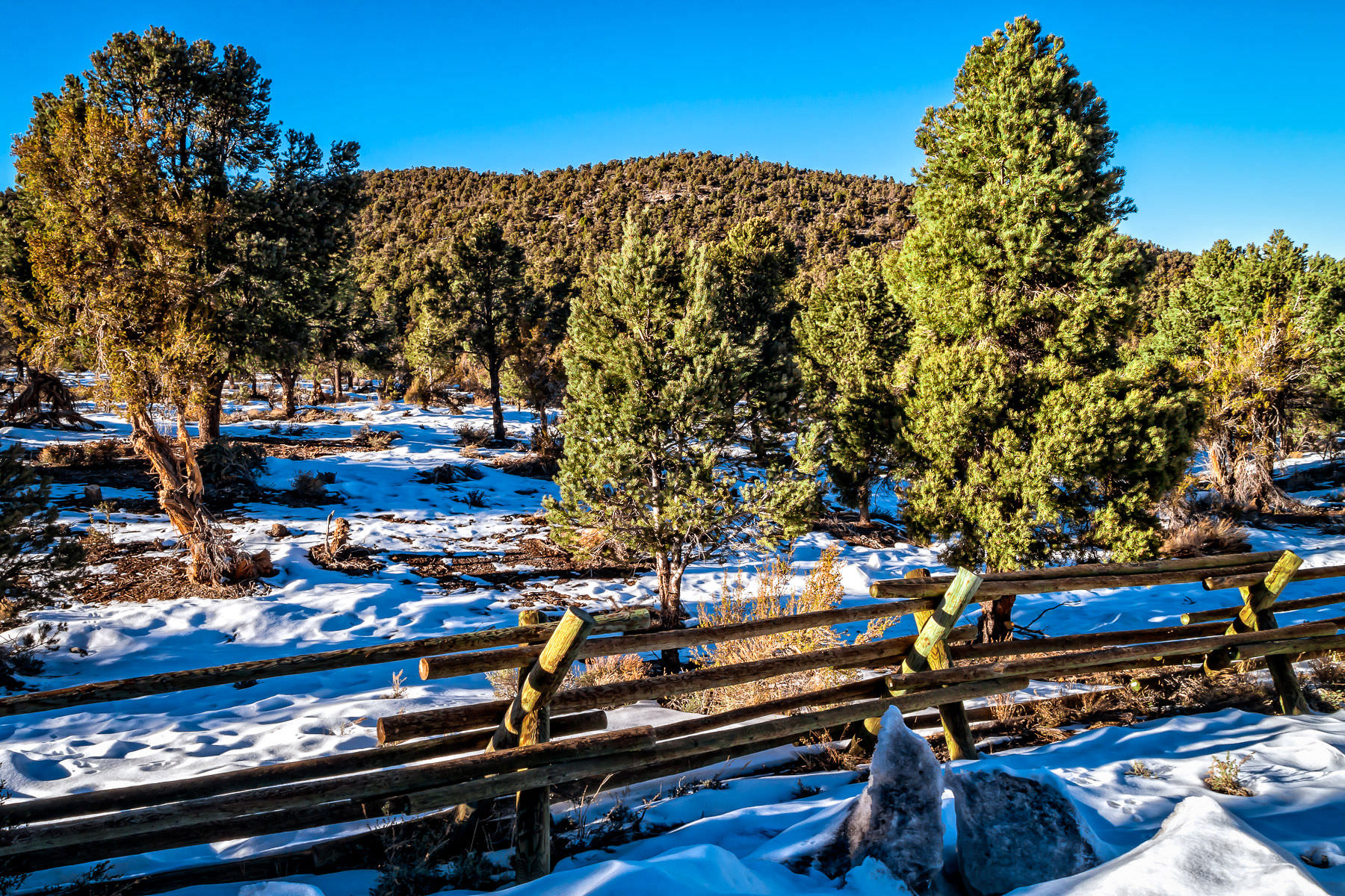 A wooden fence weathers the winter at Mount Charleston, Nevada.