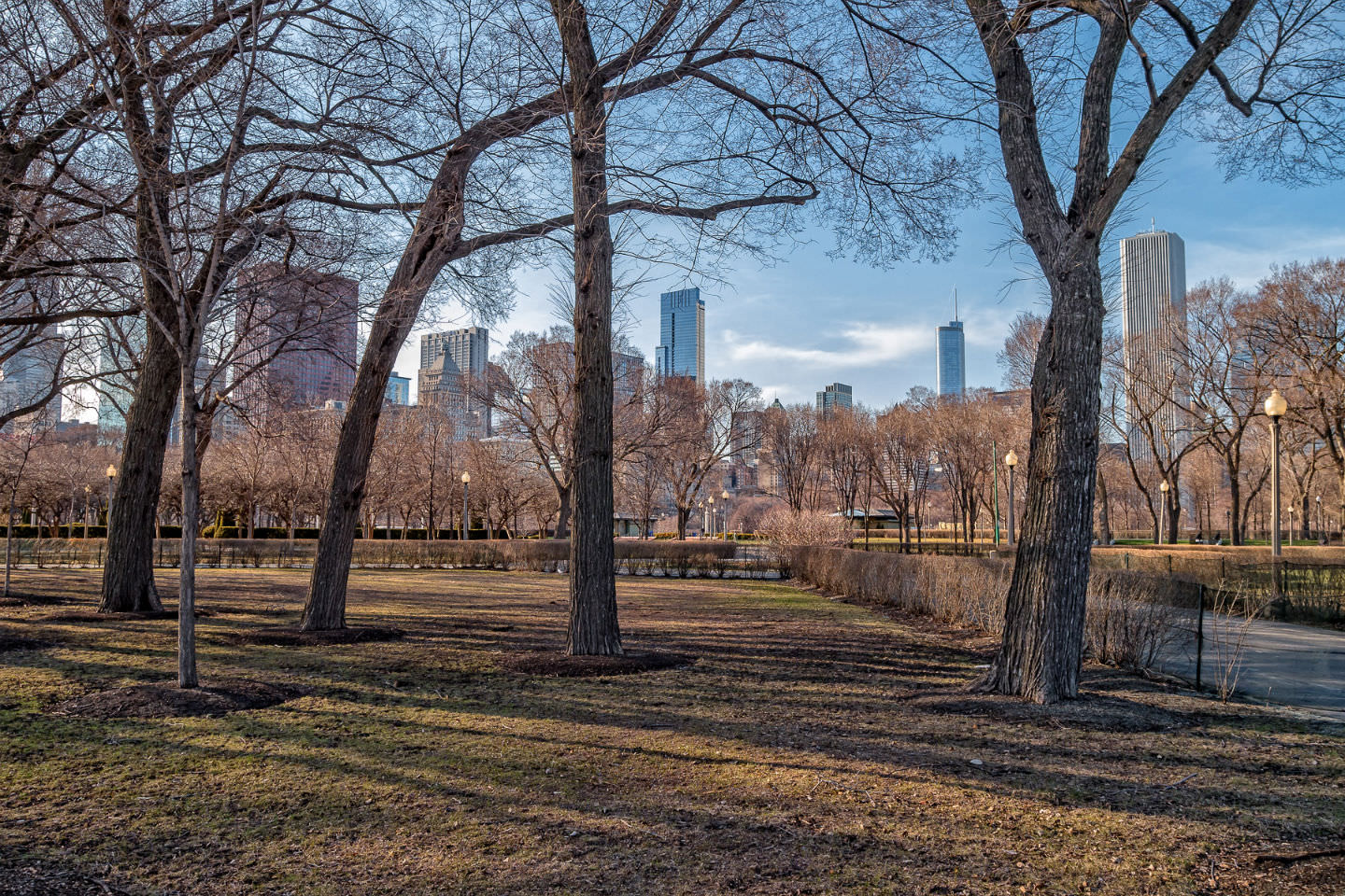 A portion of Chicago's skyline as seen through trees at Grant Park.