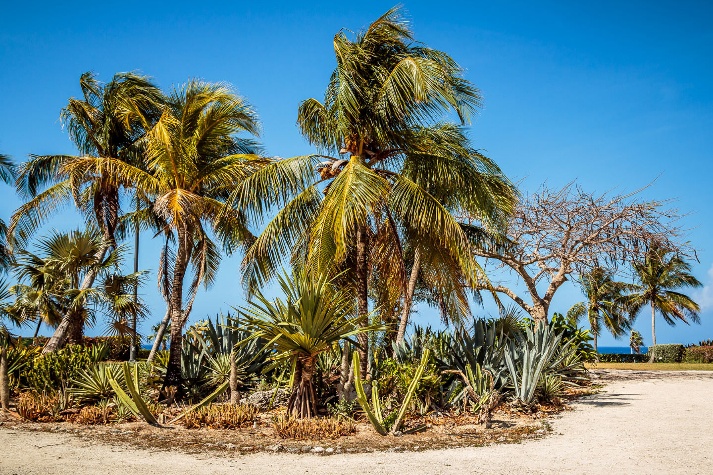 Palm trees at the Pedro St. James historic site on Grand Cayman.