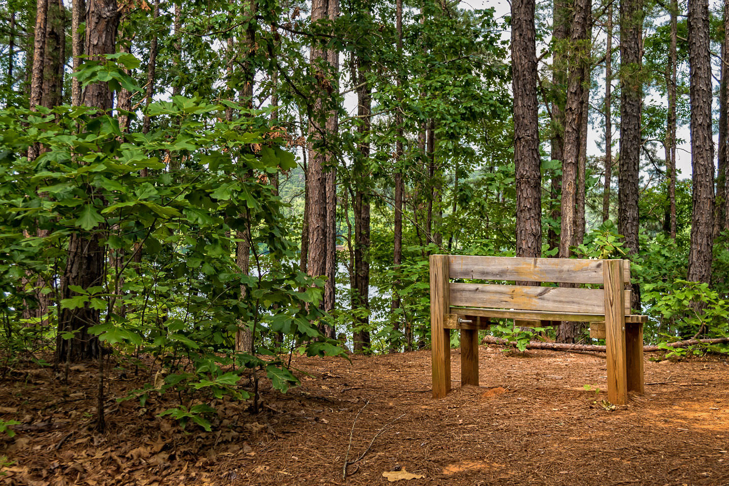 A bench on a path along the lake at Tyler State Park, Texas.