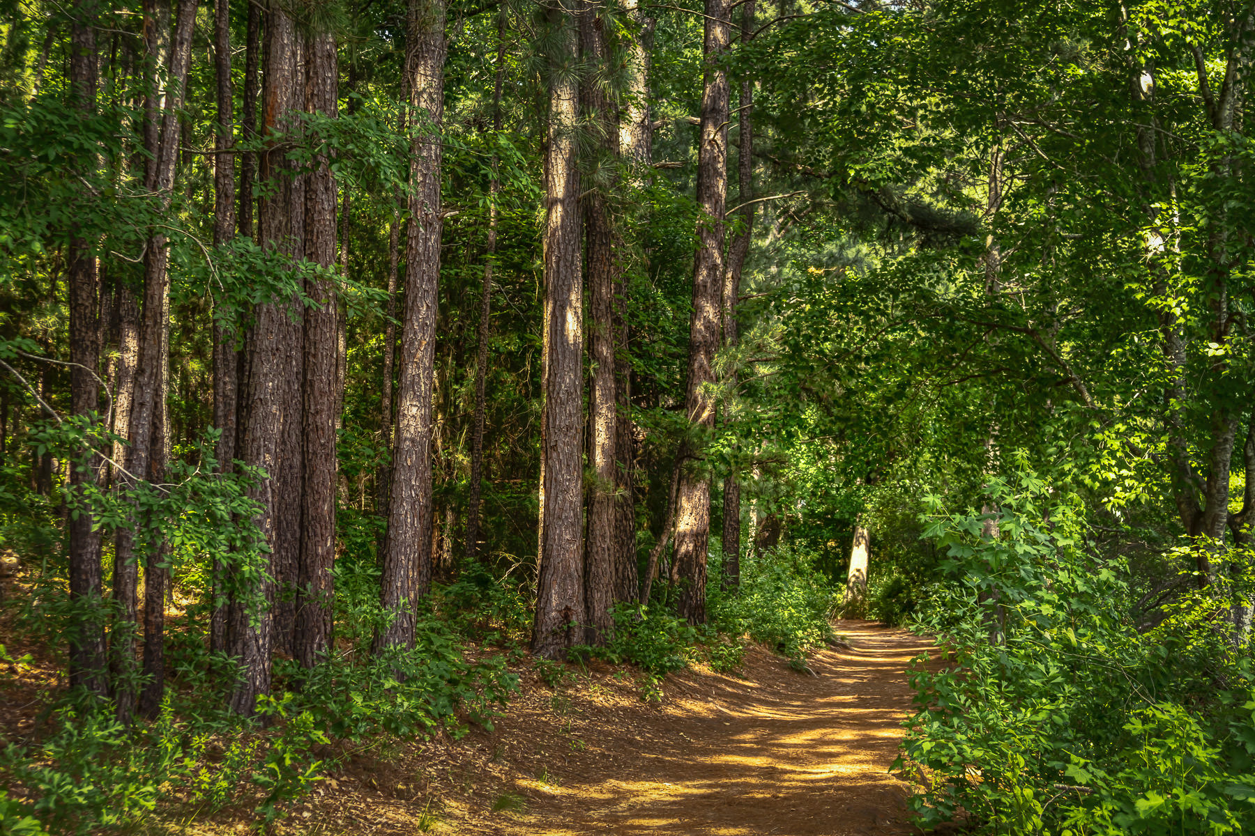 A trail through the forest at Tyler State Park, Texas.
