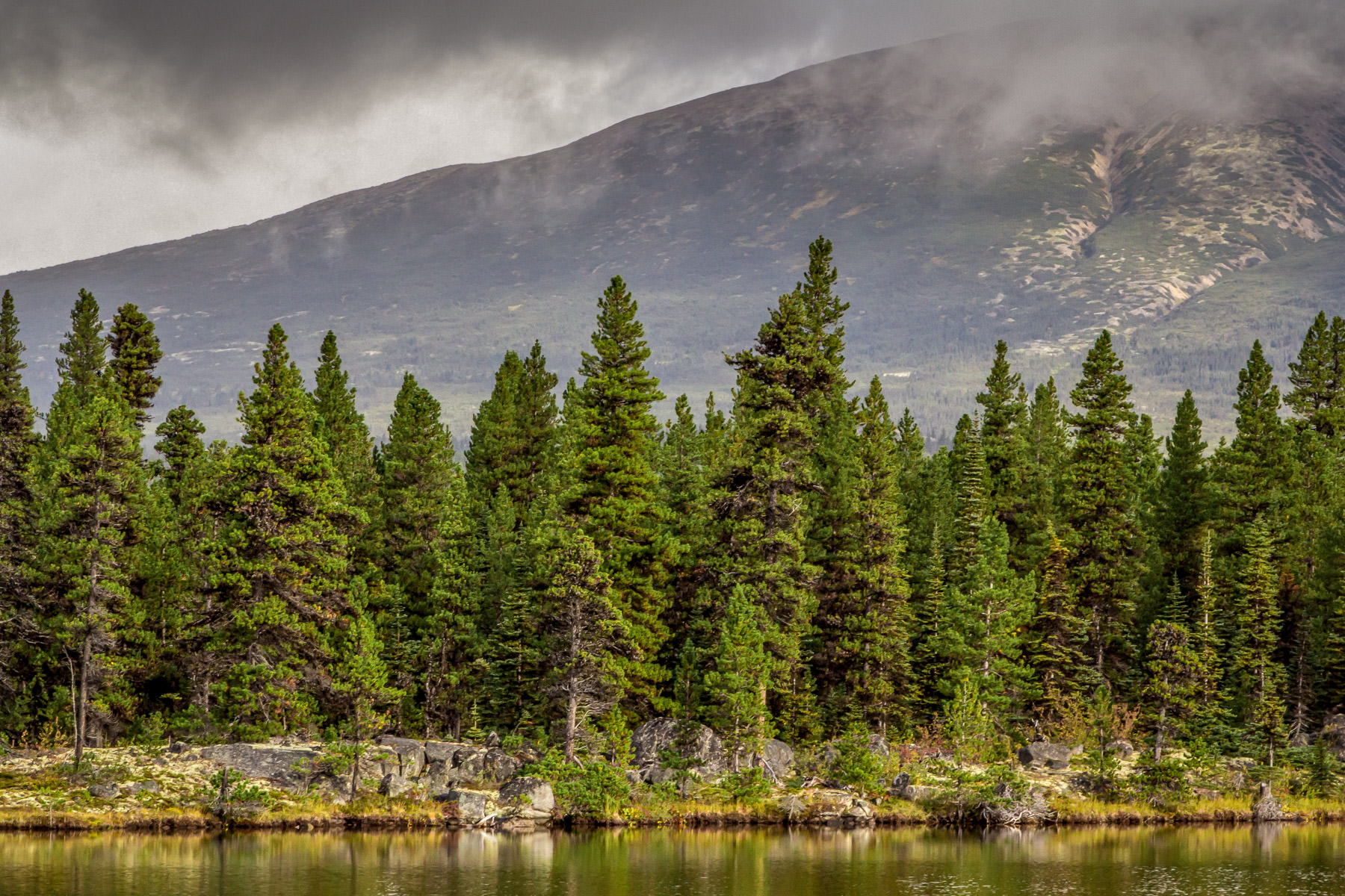 Pine trees catch the pre-rain sun as they grow along a small lake in British Columbia's Stikine Region.