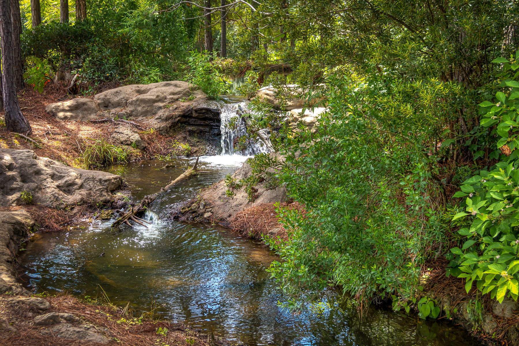 A small brook flows through the East Texas forest near Athens.