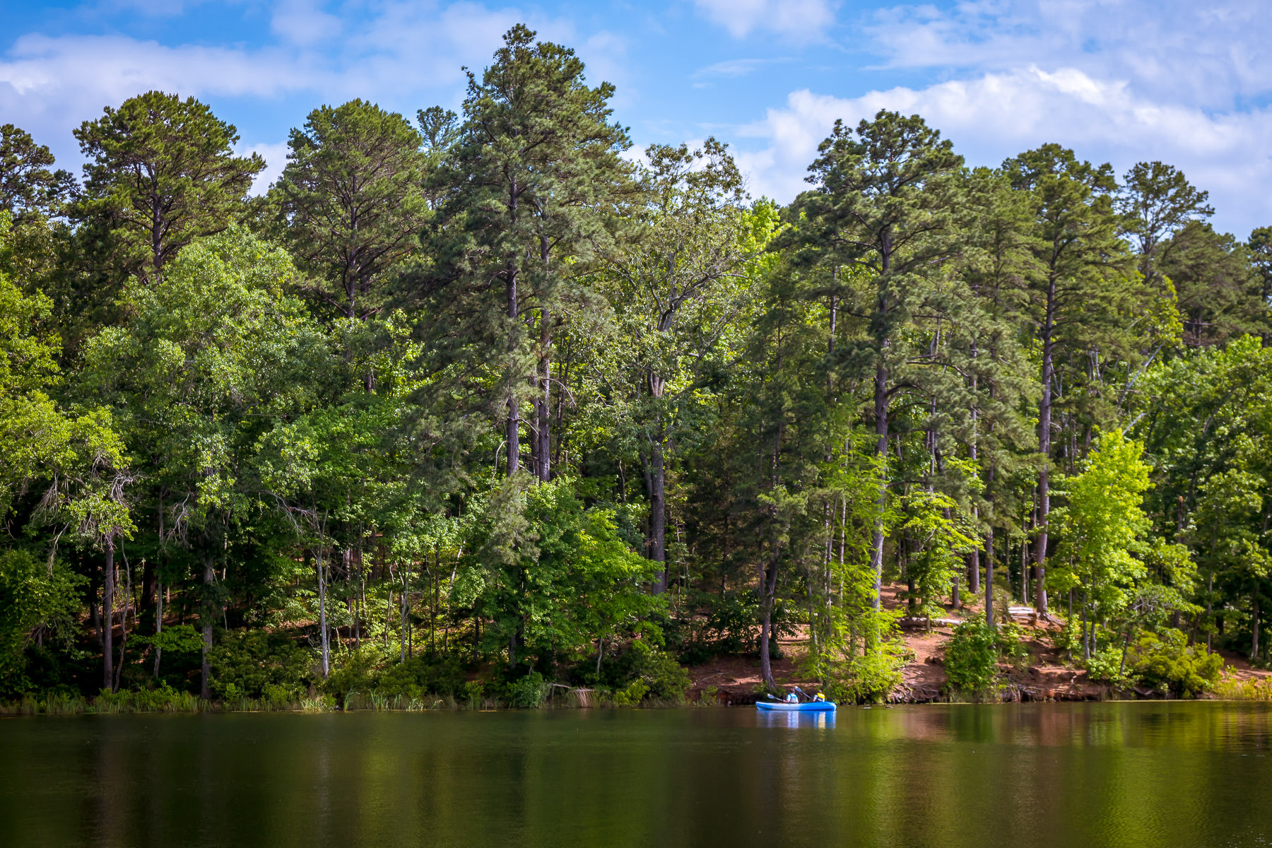 Boaters paddle along the pine tree-covered shoreline of the lake at Tyler State Park, Texas.